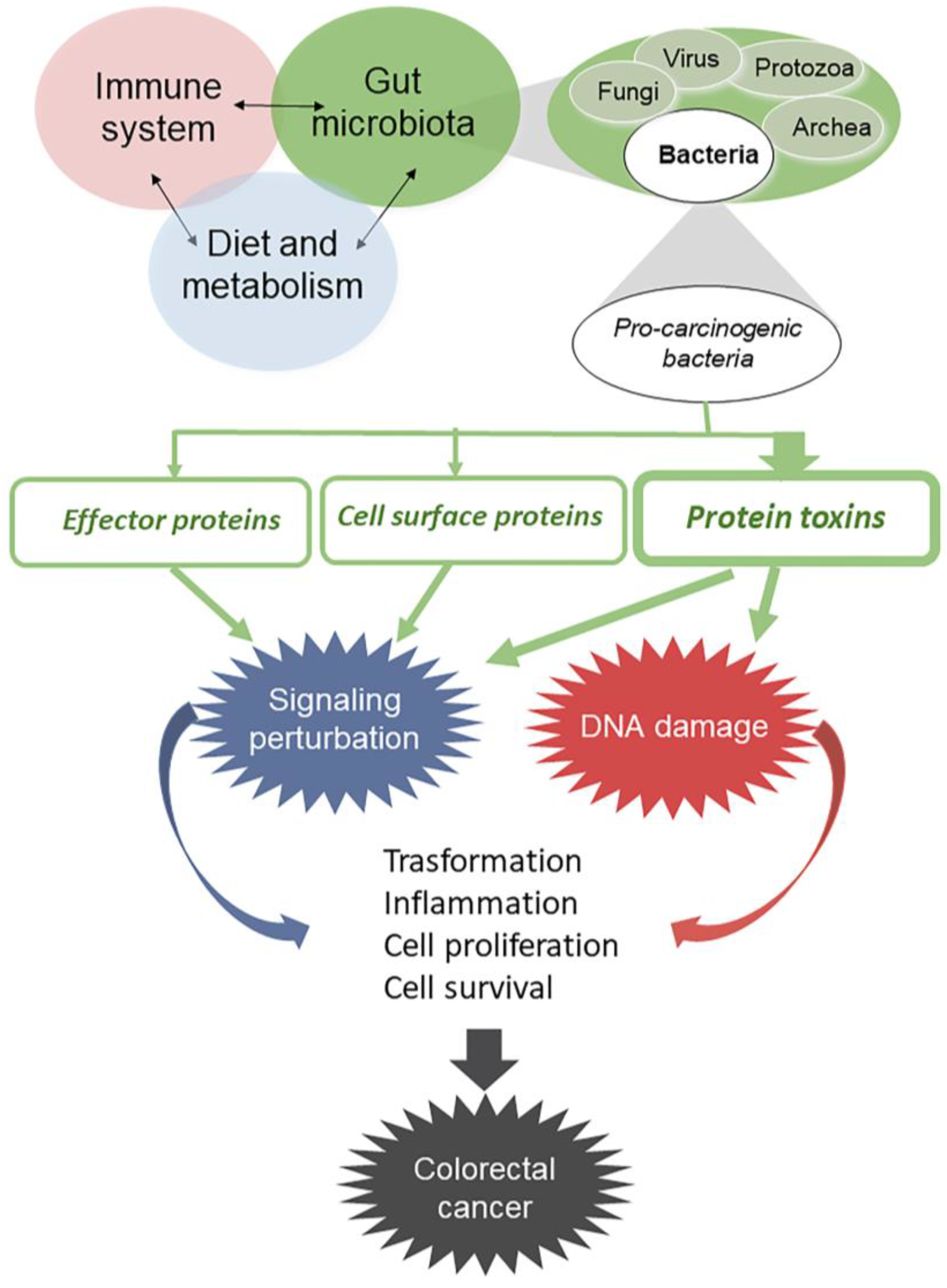 Ijms Free Full Text Gut Microbiota And Colon Cancer A Role For Bacterial Protein Toxins Html