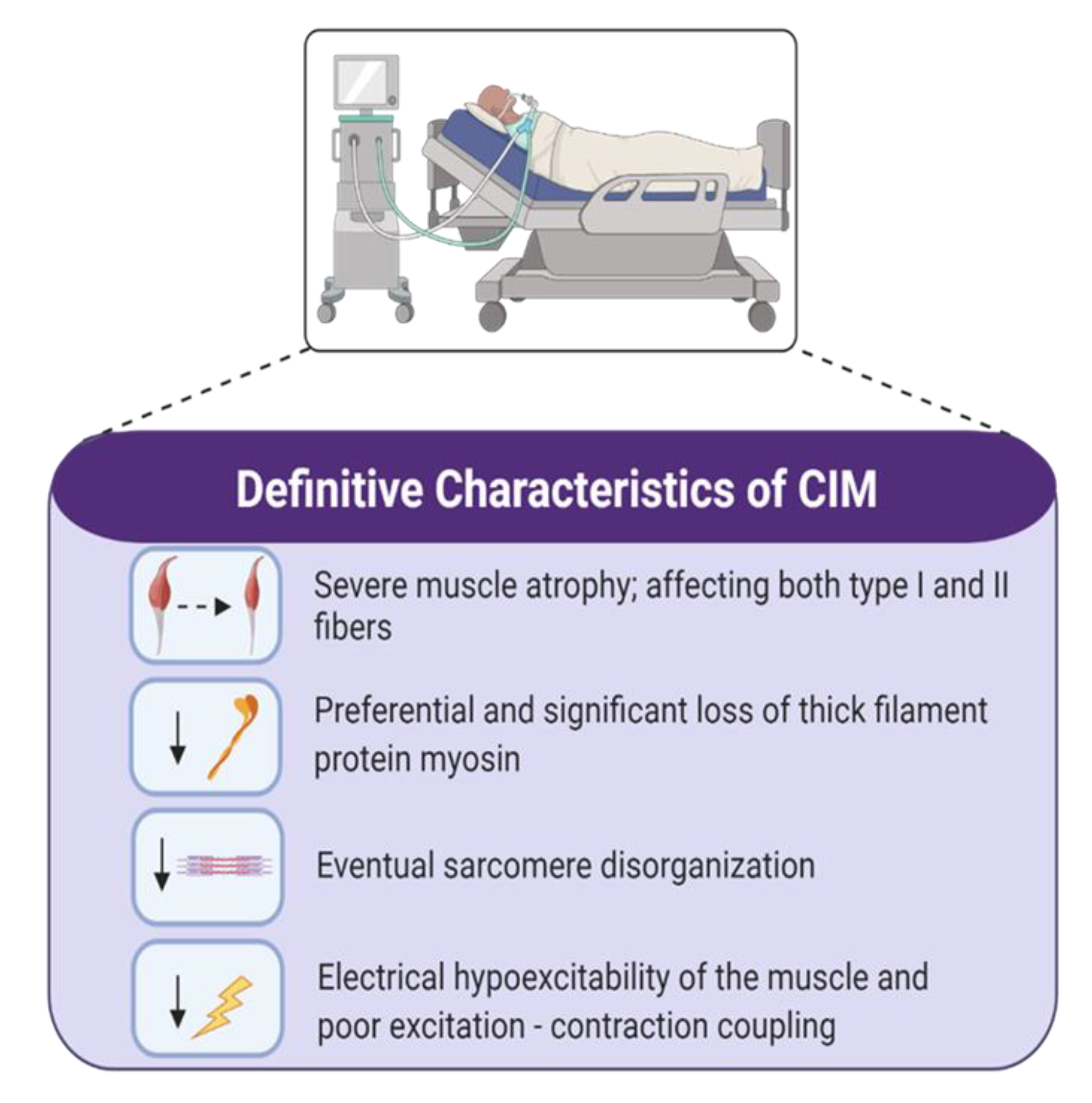 Ijms Free Full Text Intensive Care Unit Acquired Weakness Not Just Another Muscle Atrophying Condition Html