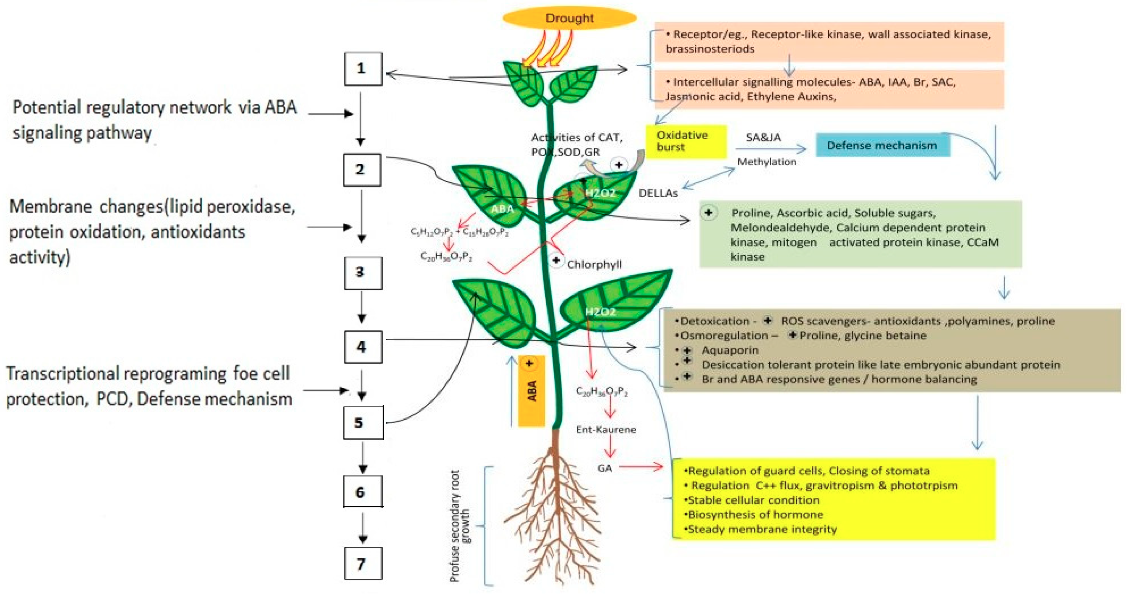 Ijms Free Full Text Seed Priming A Feasible Strategy To Enhance Drought Tolerance In Crop Plants Html