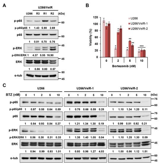 HDAC6-Selective Inhibitor Overcomes Bortezomib Resistance in Multiple Myeloma