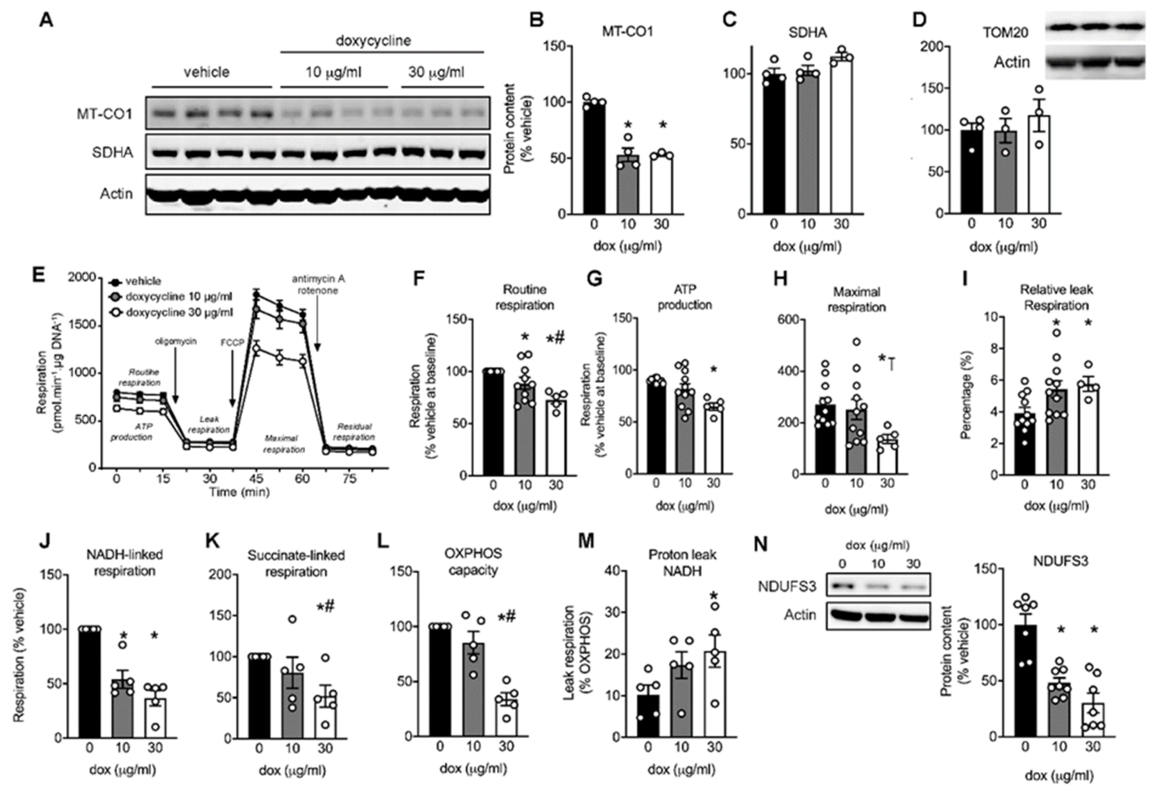 Ijms Free Full Text The Antibiotic Doxycycline Impairs Cardiac Mitochondrial And Contractile Function Html