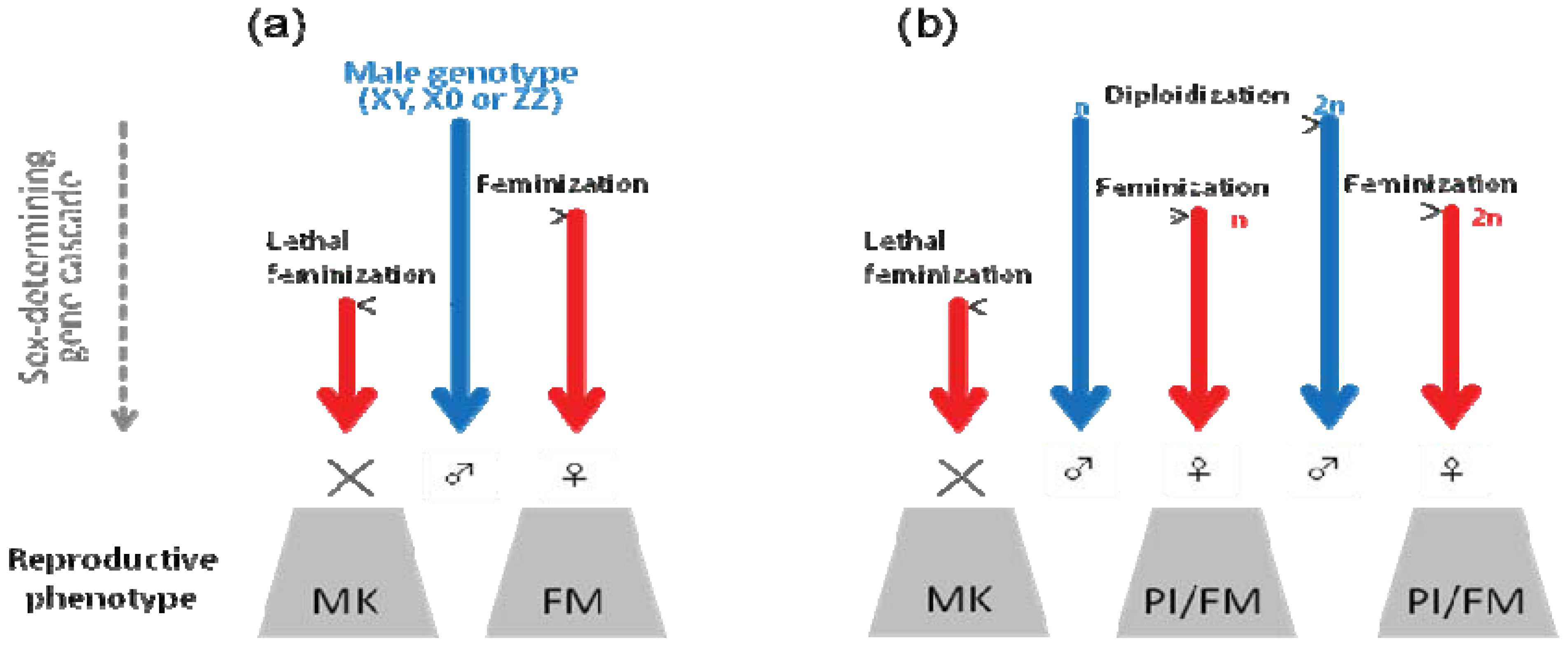 article on sex determination in numerous This article has been cited by other articles in pmc  many biologists are  habituated to thinking about sex determination through the familiar.