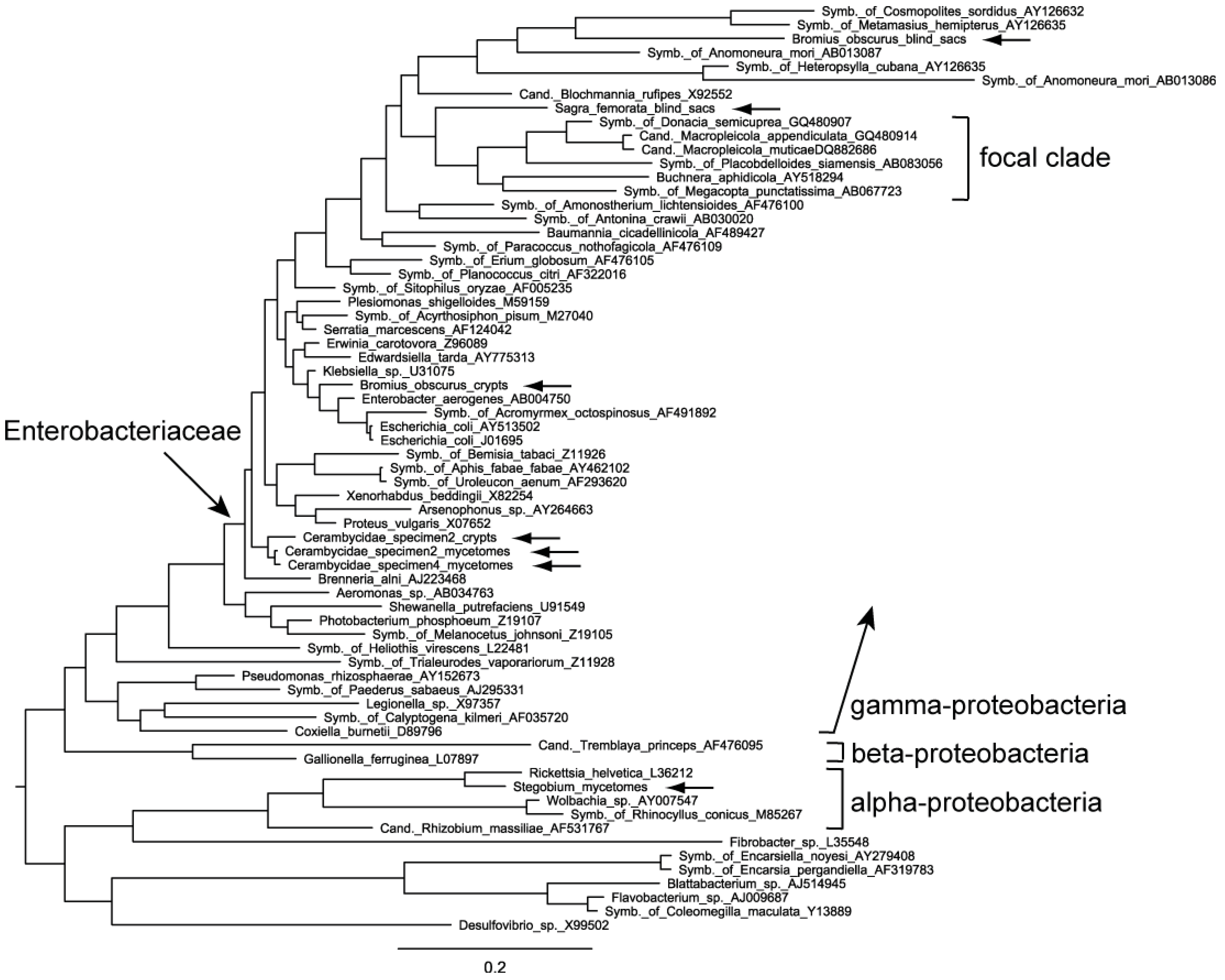 an analysis of the bacterial symbionts and the use of insecticides against anthropods Activity of eight strains of entomopathogenic nematodes (rhabditida: steinernematidae, heterorhabditidae) against five stored product pests pubmed.