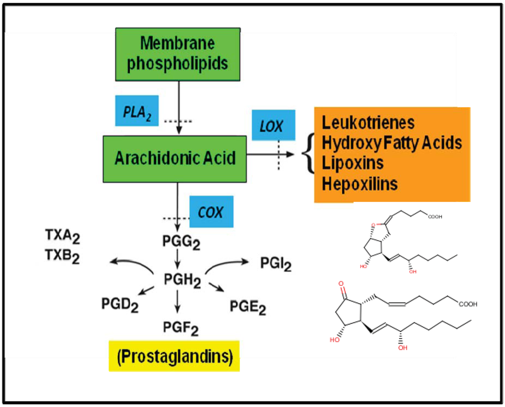 biosynthesis of steroidal glycosides