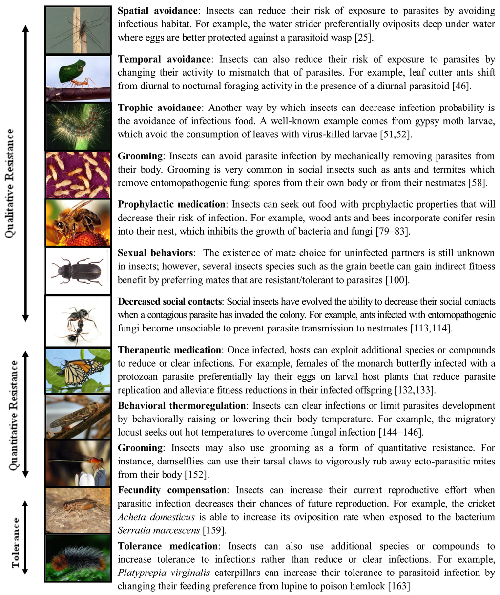 Insects | Free Full-Text | Behavioral Immunity in Insects | HTML