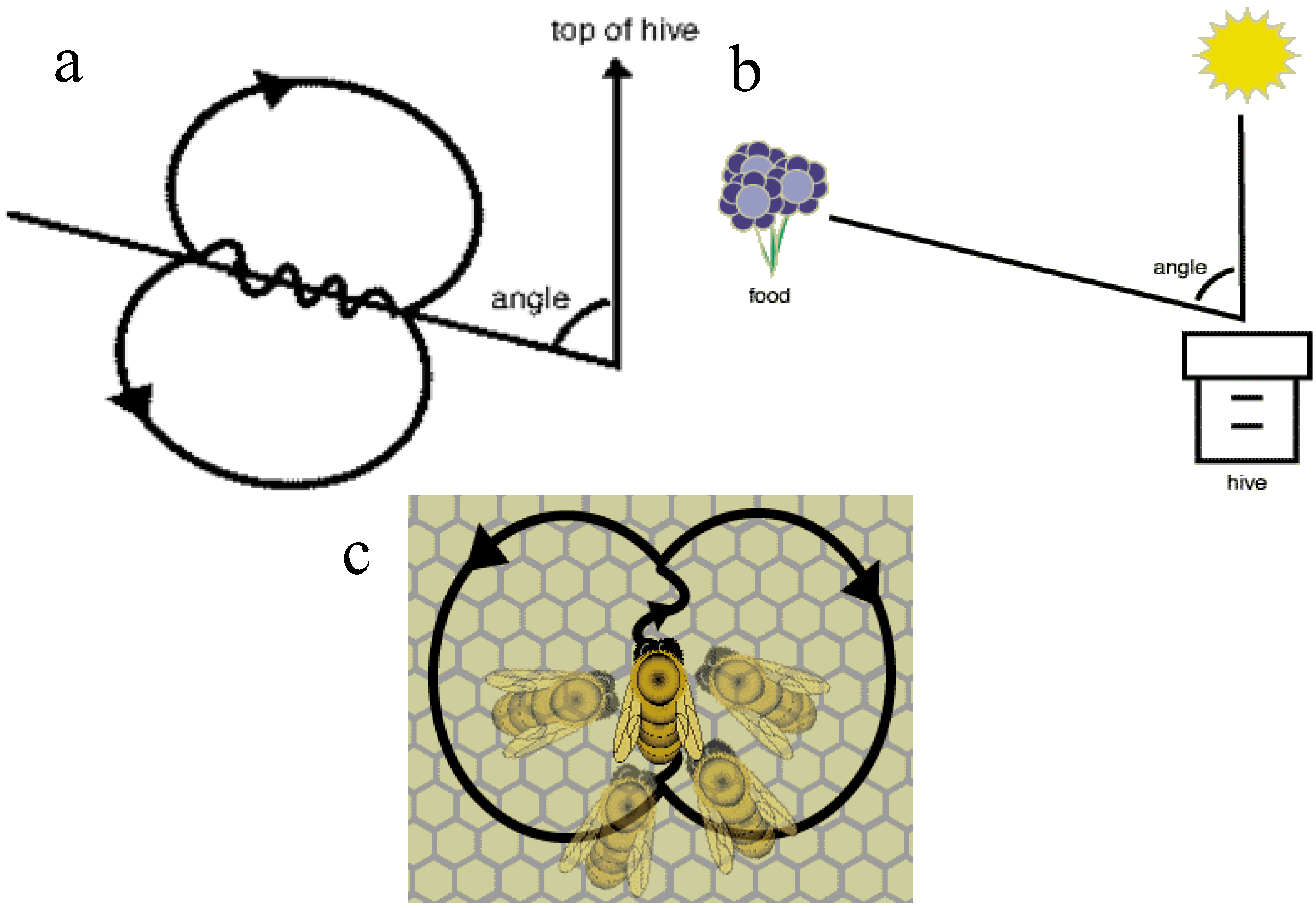 Insects free full text honey bees inspired optimization method the bees algorithm html - Building orientation to optimize sun exposure ...