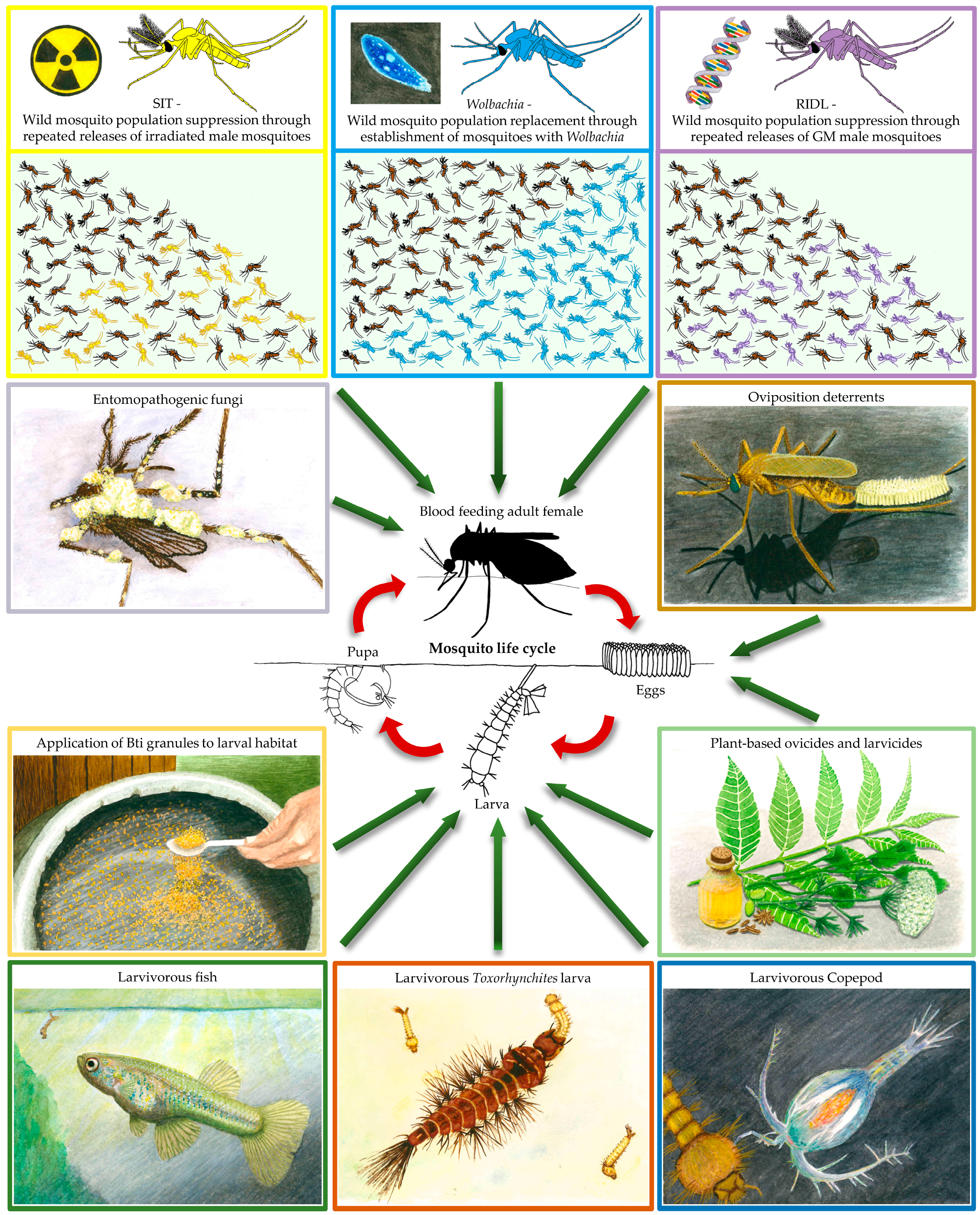 insects | free full-text | biological control of mosquito vectors: past,  present, and future  mdpi