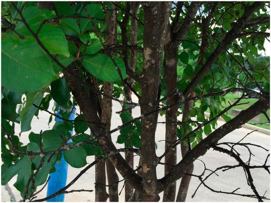Erot tree trimming protocols