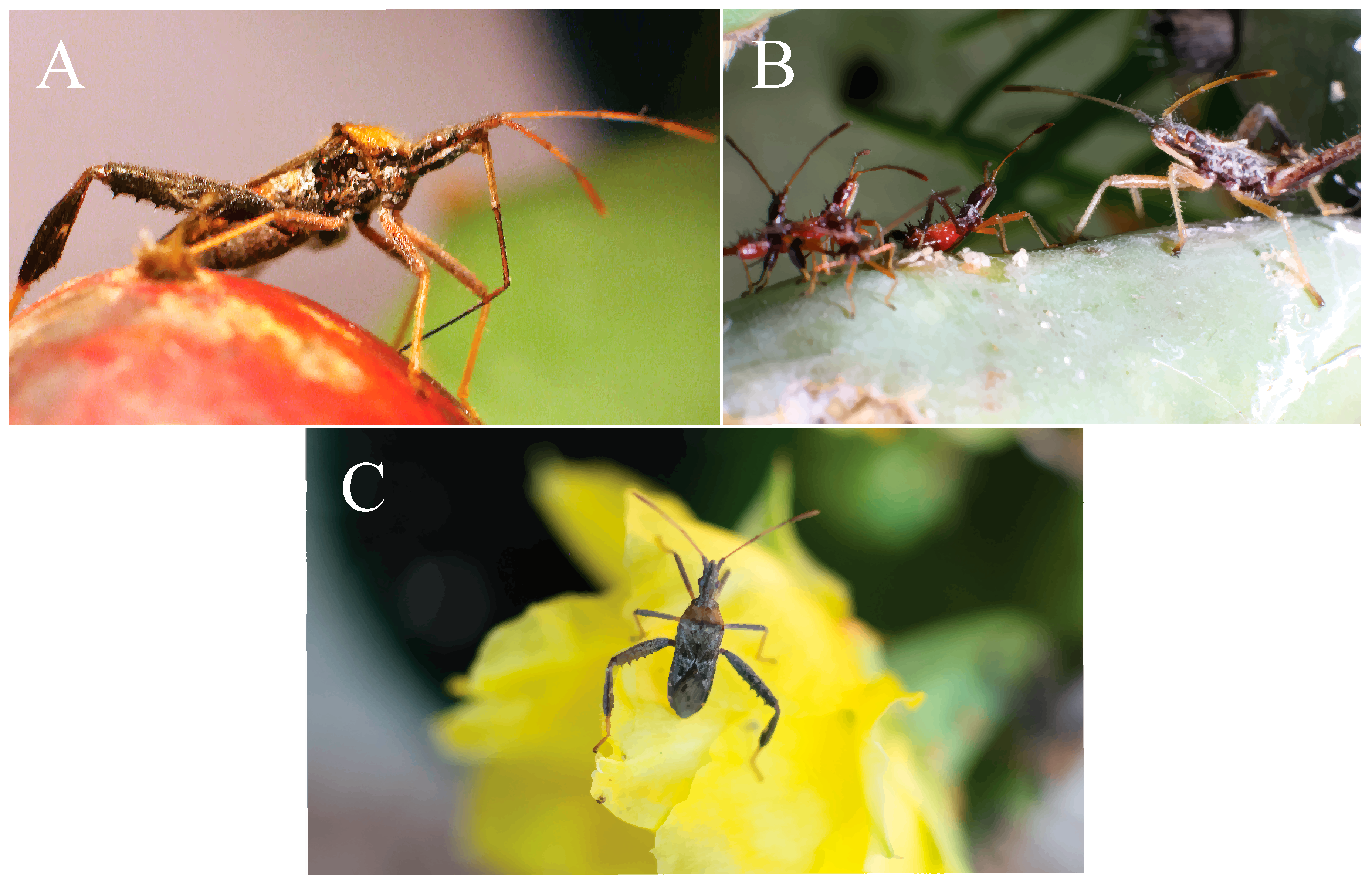 Insects: a selection of sites