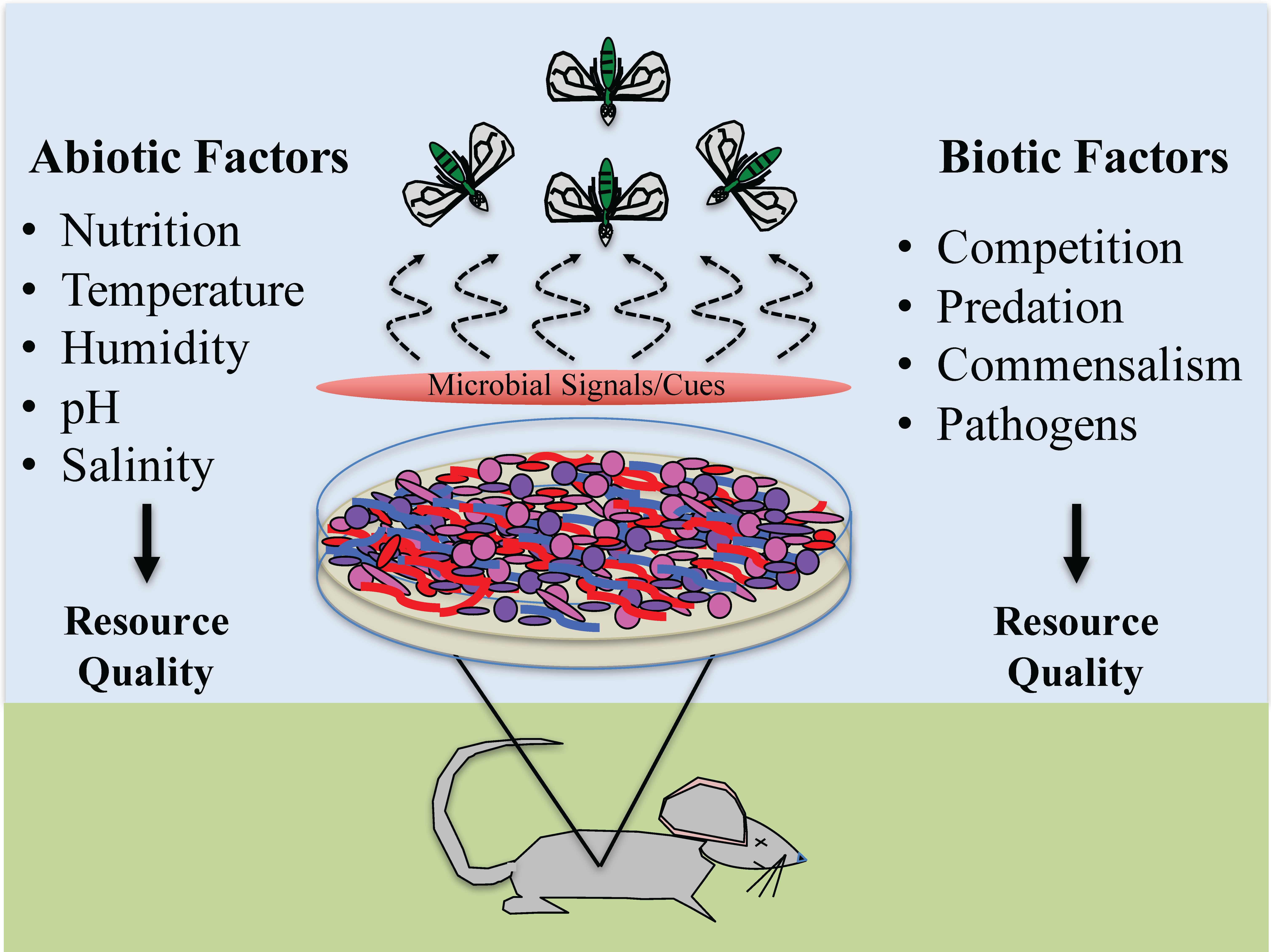 Insects Free Full Text Abiotic And Biotic Factors Regulating Inter Kingdom Engagement Between Insects And Microbe Activity On Vertebrate Remains Html