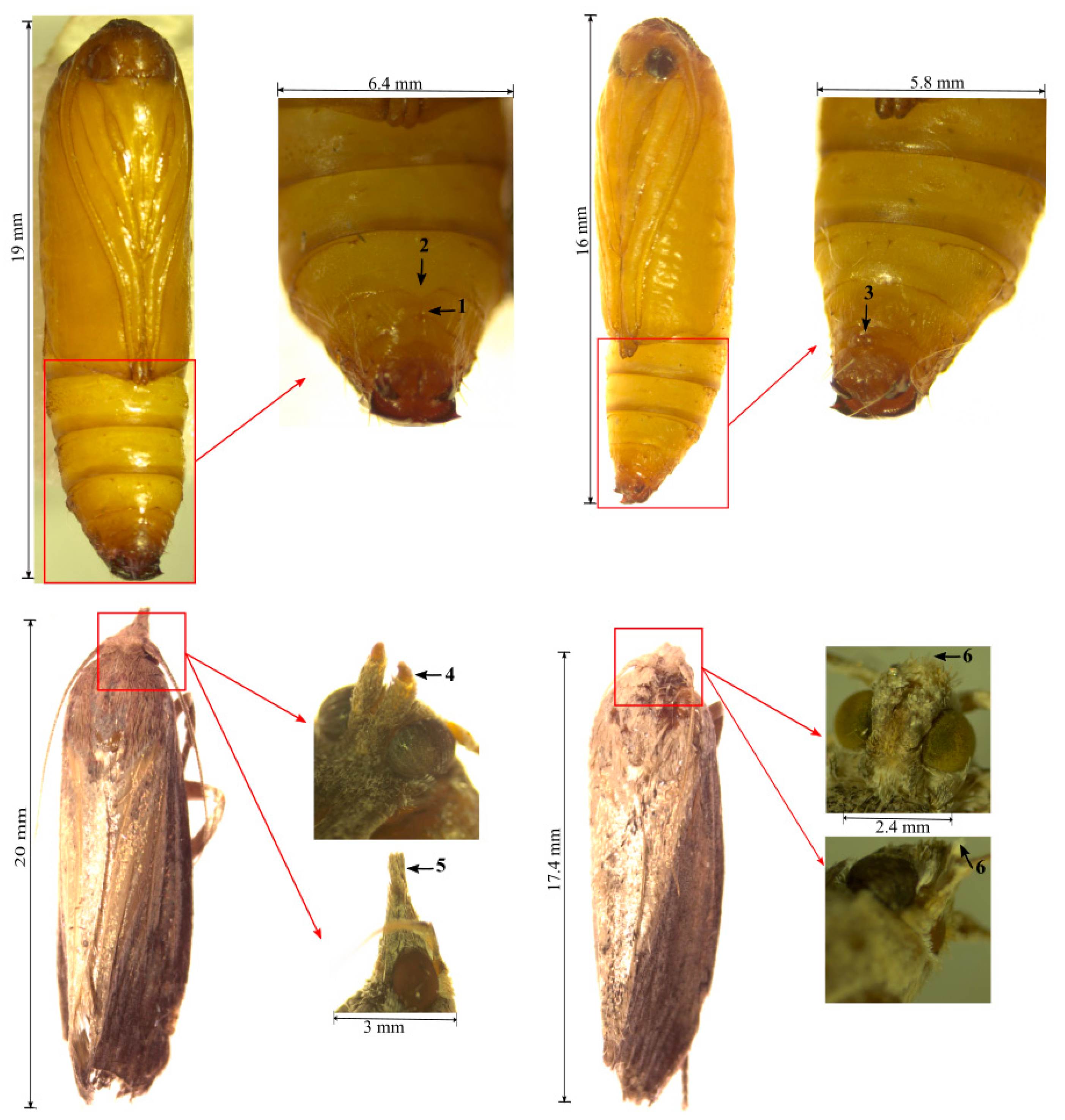 Insects Free Full Text The Biology And Control Of The Greater Wax Moth Galleria Mellonella