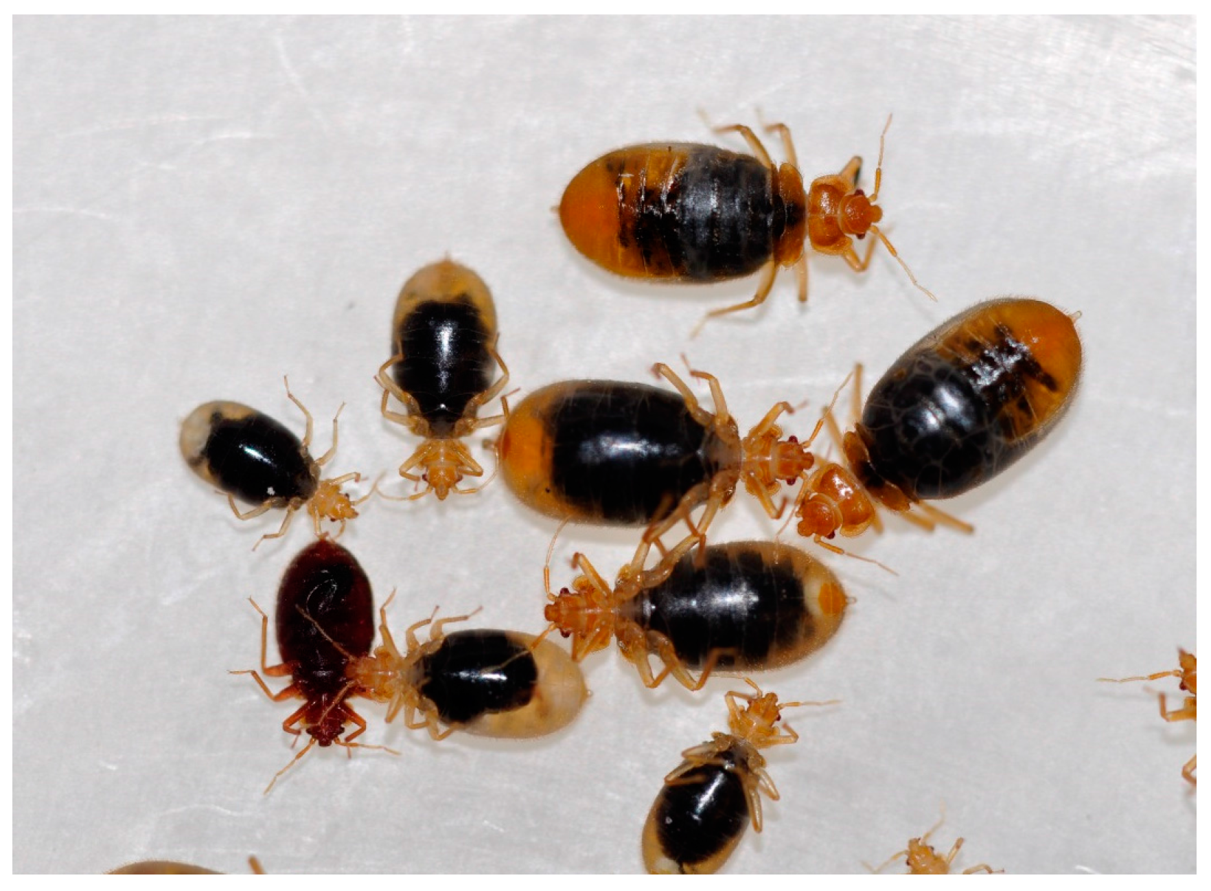 Insects | Free Full-Text | Effect of Moxidectin on Bed Bug Feeding, Development, Fecundity, and Survivorship | HTML