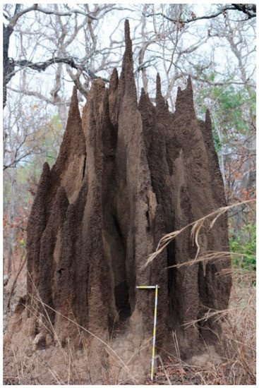 Insects Special Issue Ecology Of Termites