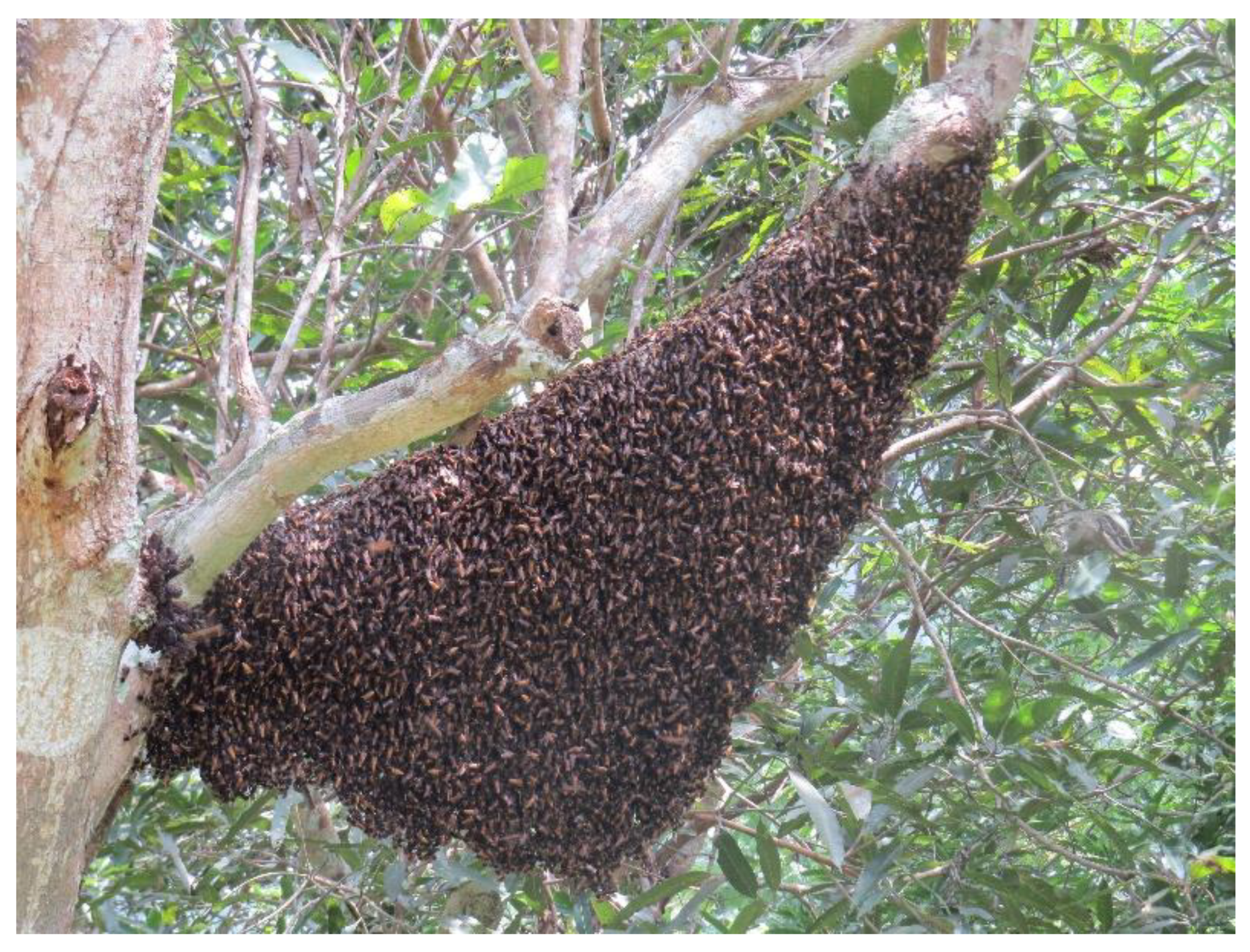 TWO 2-Dose Formic Pro packages Treat 4 bee hives for Varroa Mites