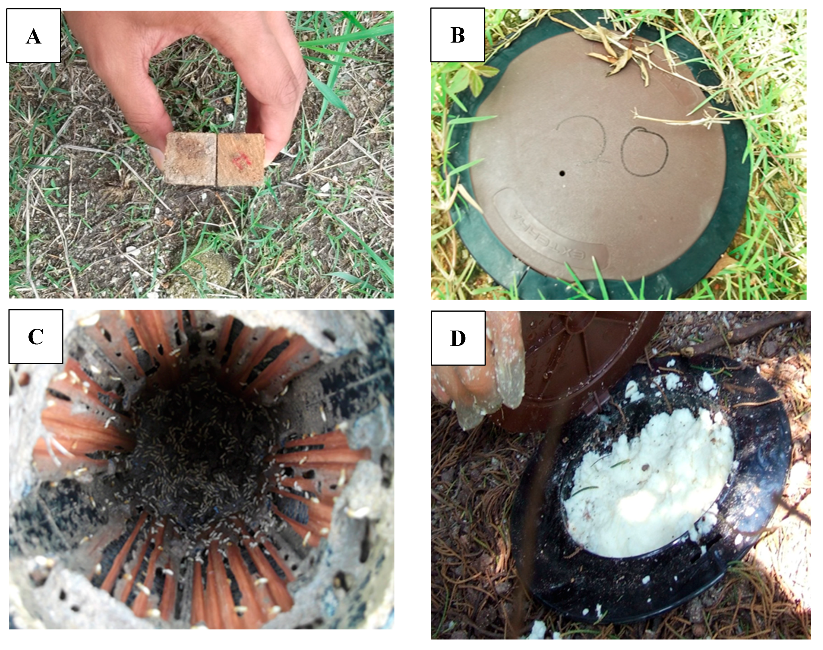 Insects Free Full Text Efficacy Of Minimum Application Of Chlorfluazuron Baiting To Control Urban Subterranean Termite Populations Of Coptotermes Gestroi Wasmann Blattodea Rhinotermitidae Html