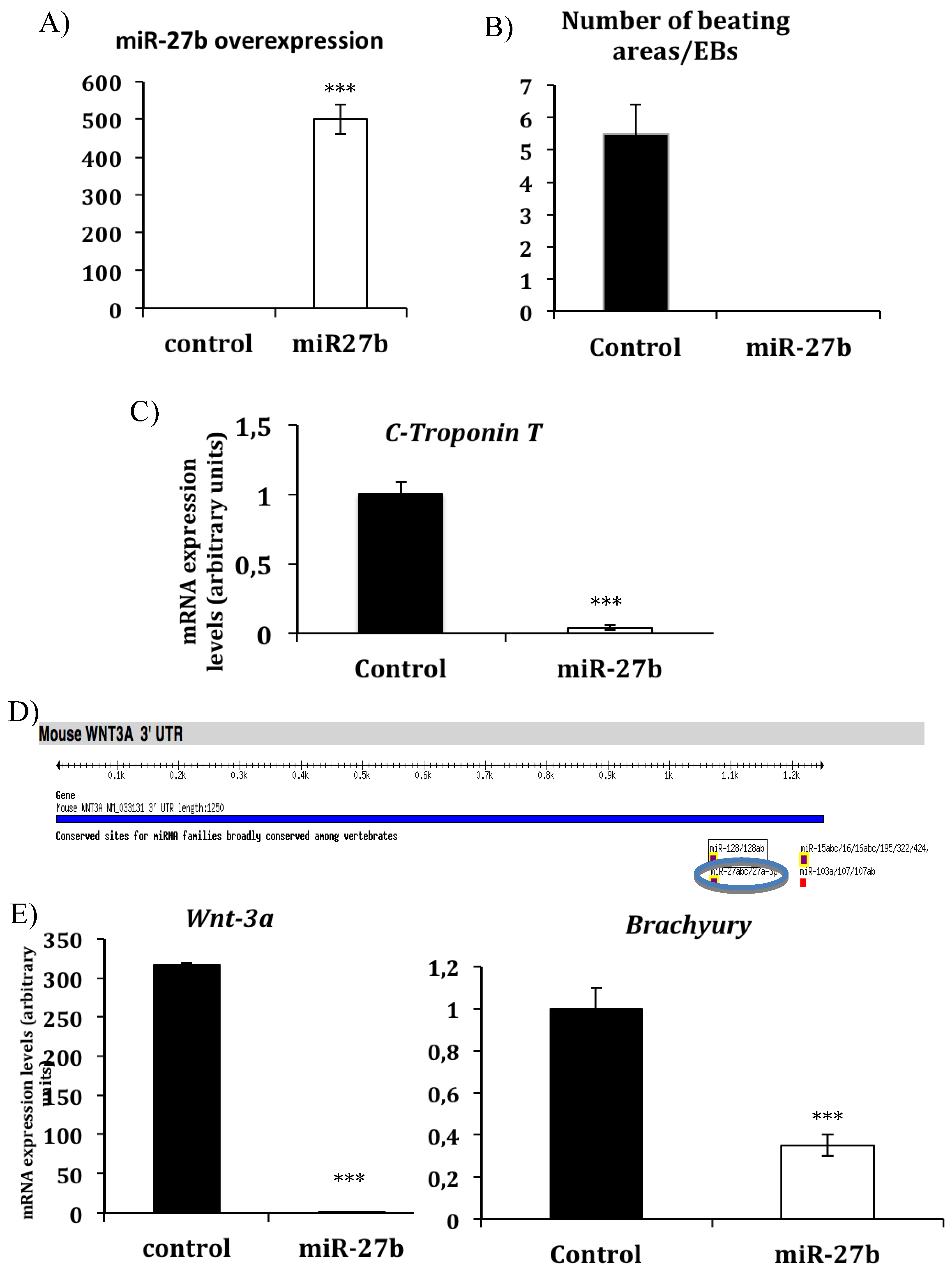 JCDD | Free Full-Text | miR-27b and miR-23b Modulate Cardiomyocyte ...