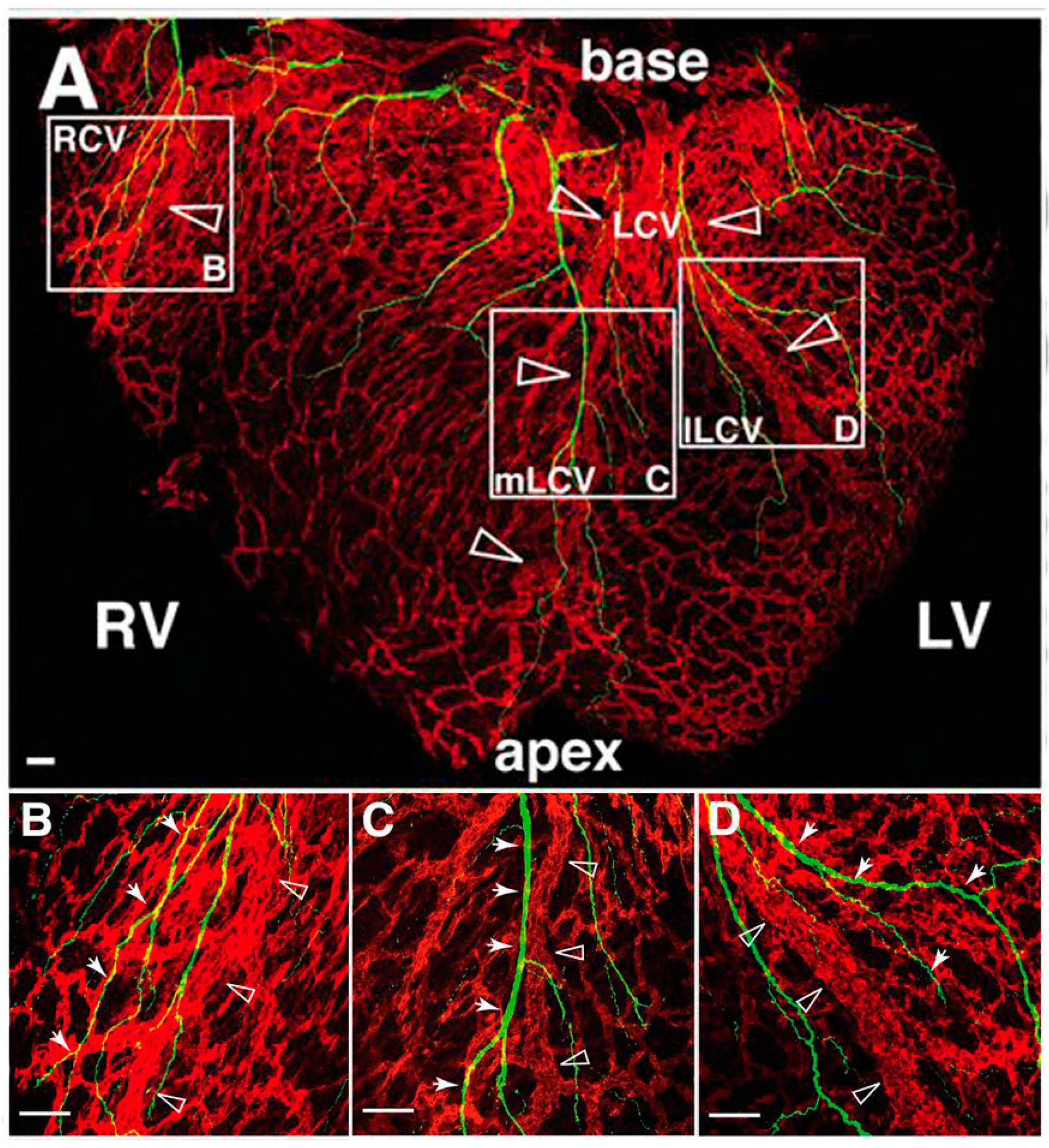 JCDD | Free Full-Text | Part and Parcel of the Cardiac Autonomic ...