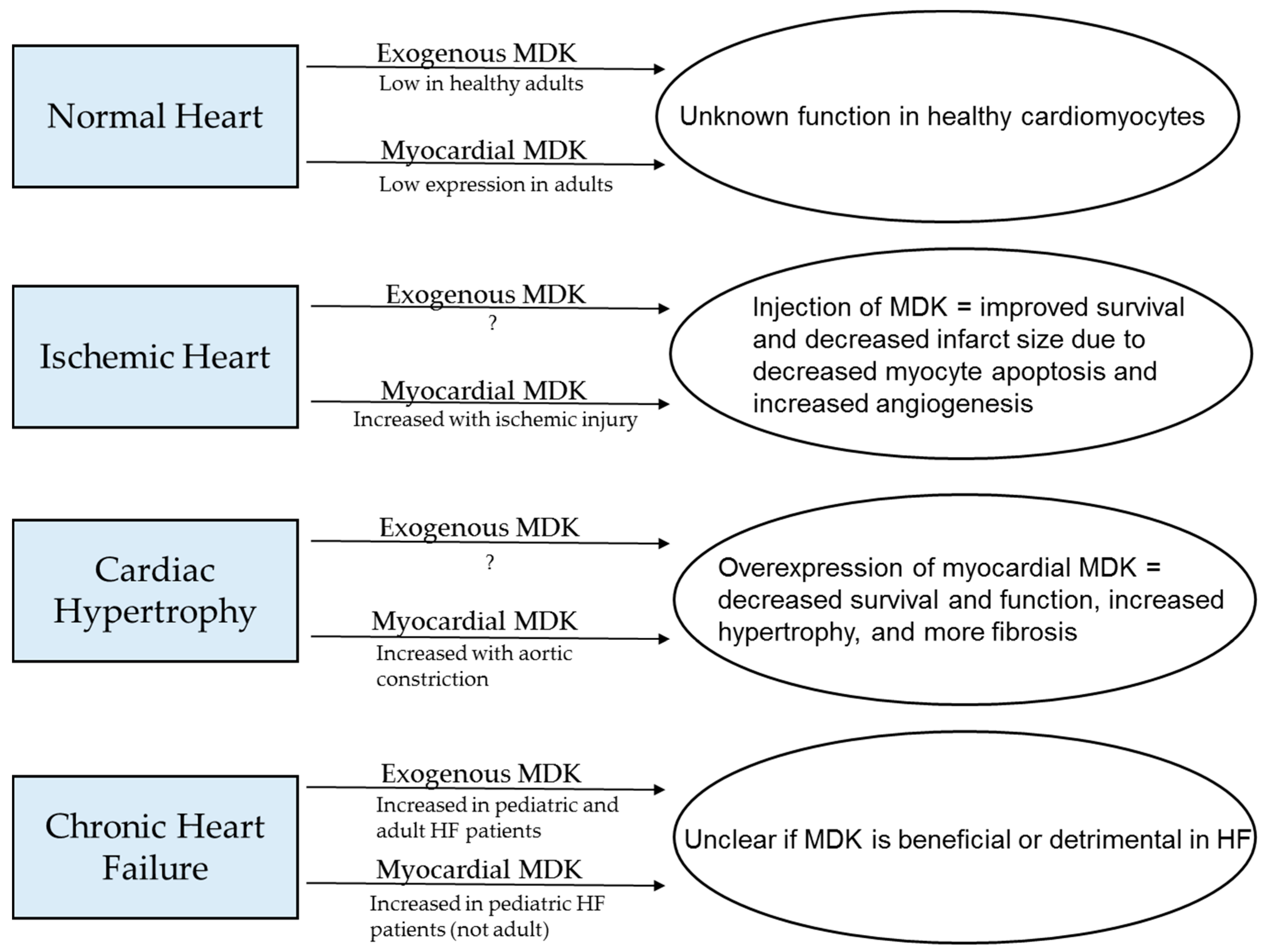 JCDD | Free Full-Text | Midkine's Role in Cardiac Pathology | HTML