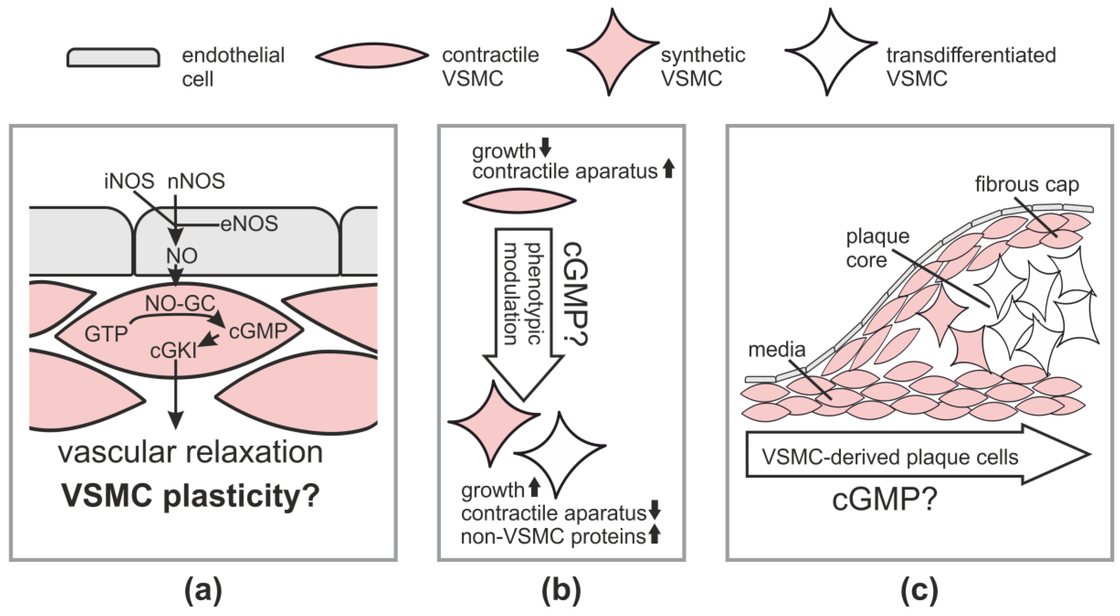 JCDD | Free Full-Text | cGMP Signaling and Vascular Smooth Muscle ...