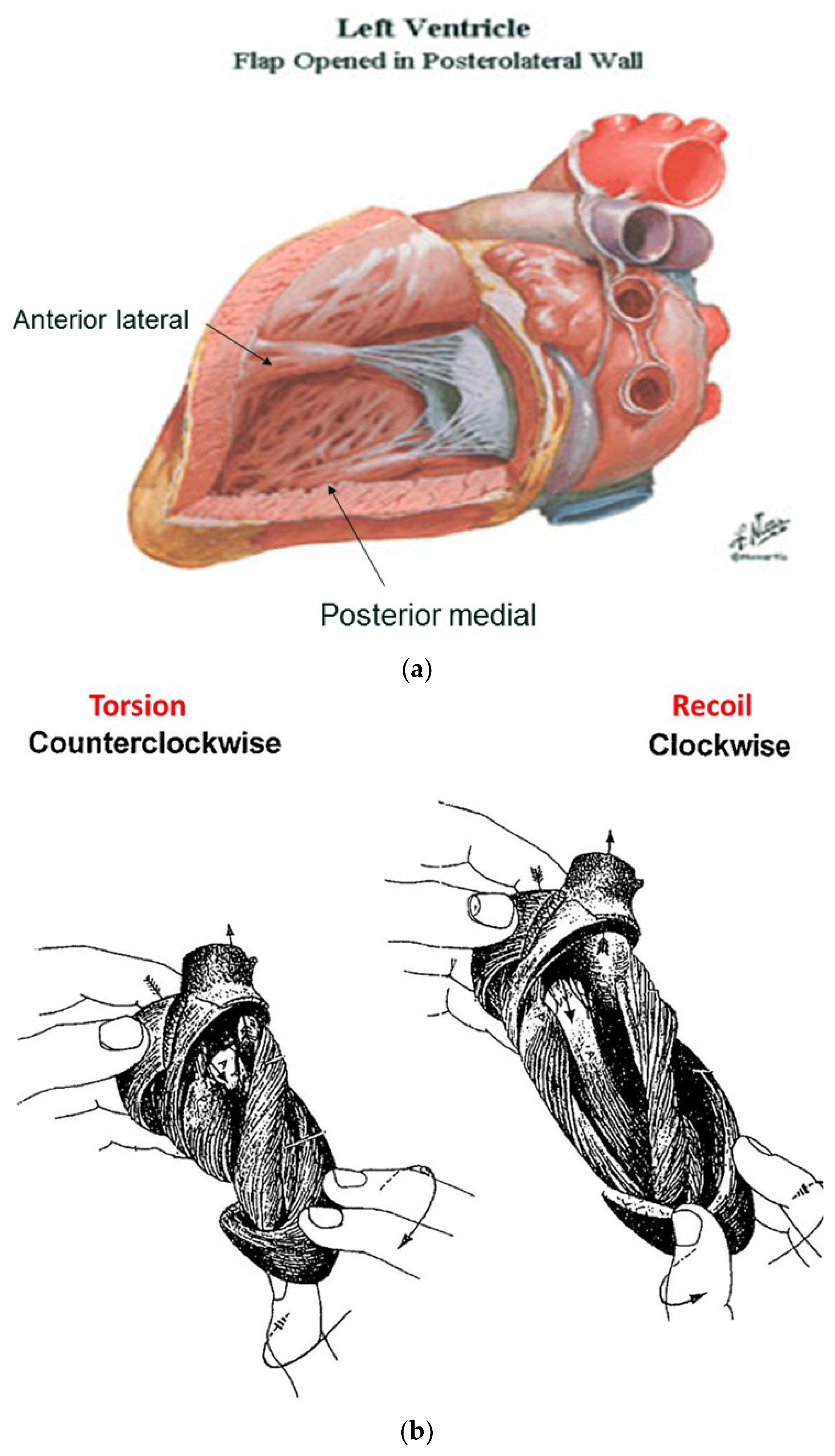 JCDD | Free Full-Text | What Is the Heart? Anatomy, Function ...