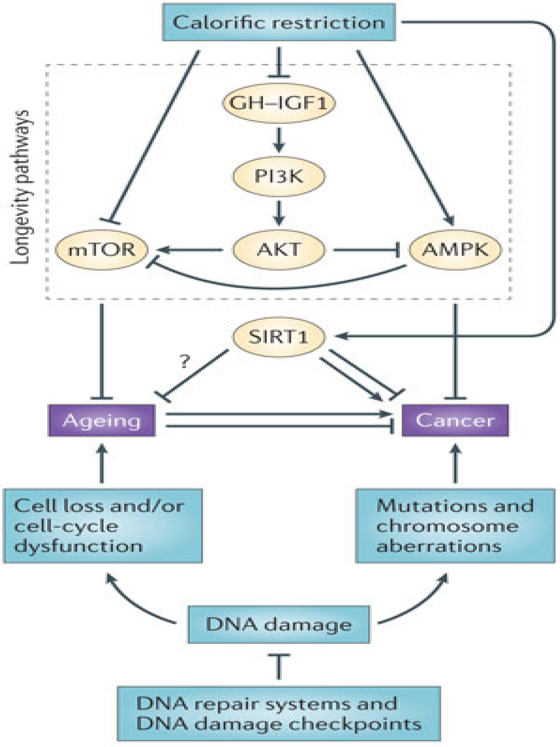 Jcm Free Full Text Adult Stem Cells And Diseases Of Aging