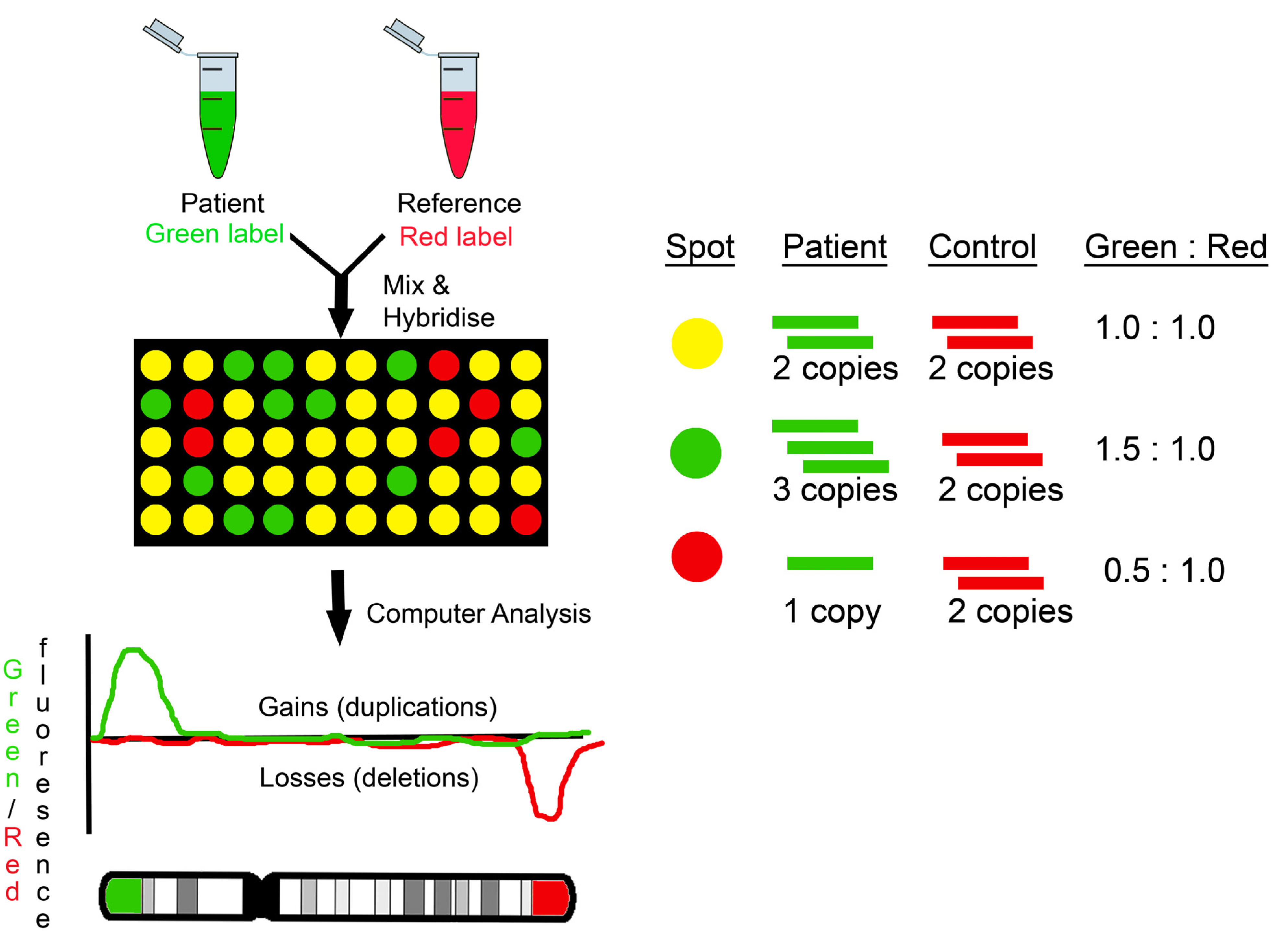 Comparative analysis of the gene expression programs in