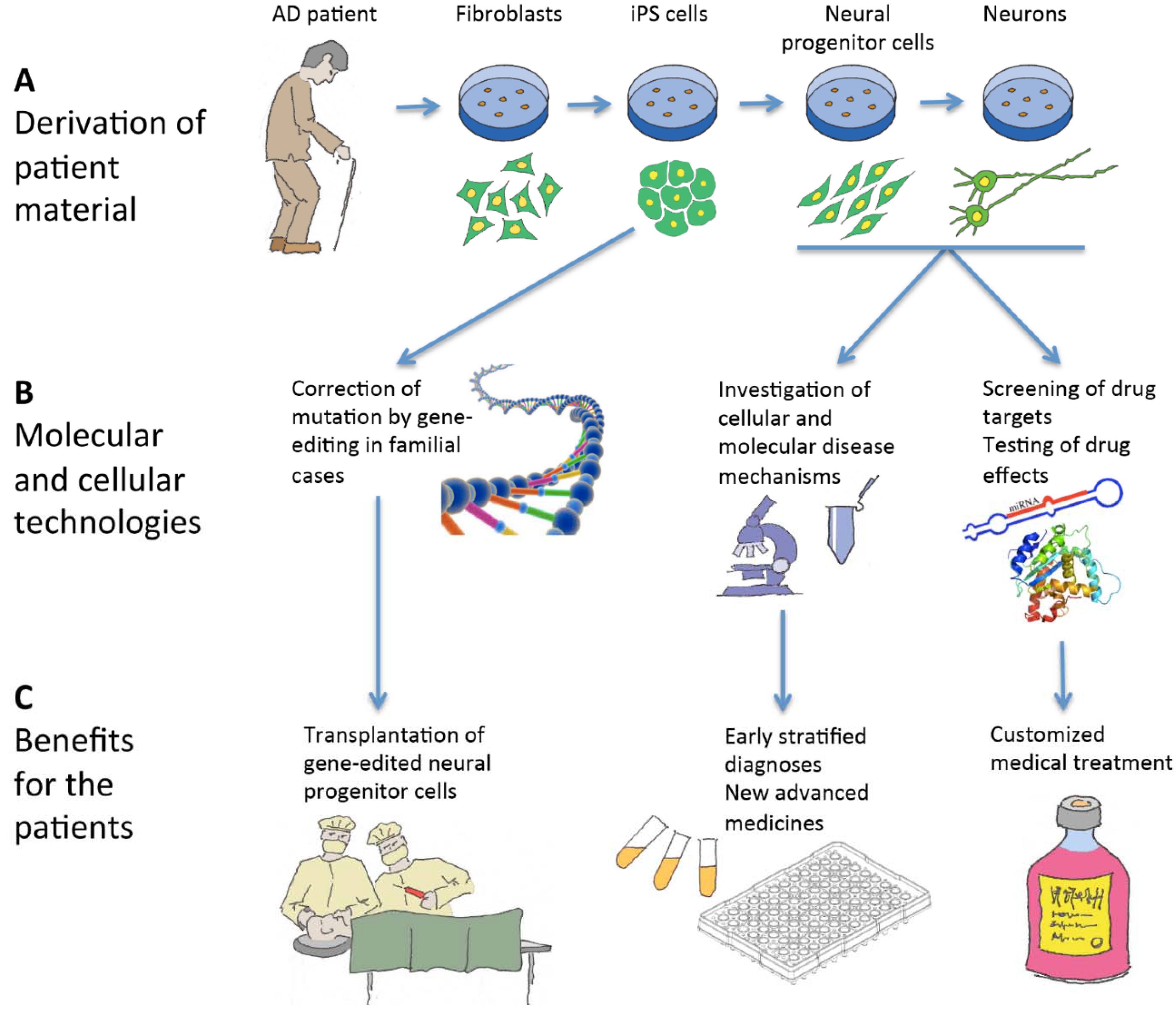 Jcm Free Full Text Induced Pluripotent Stem Cells