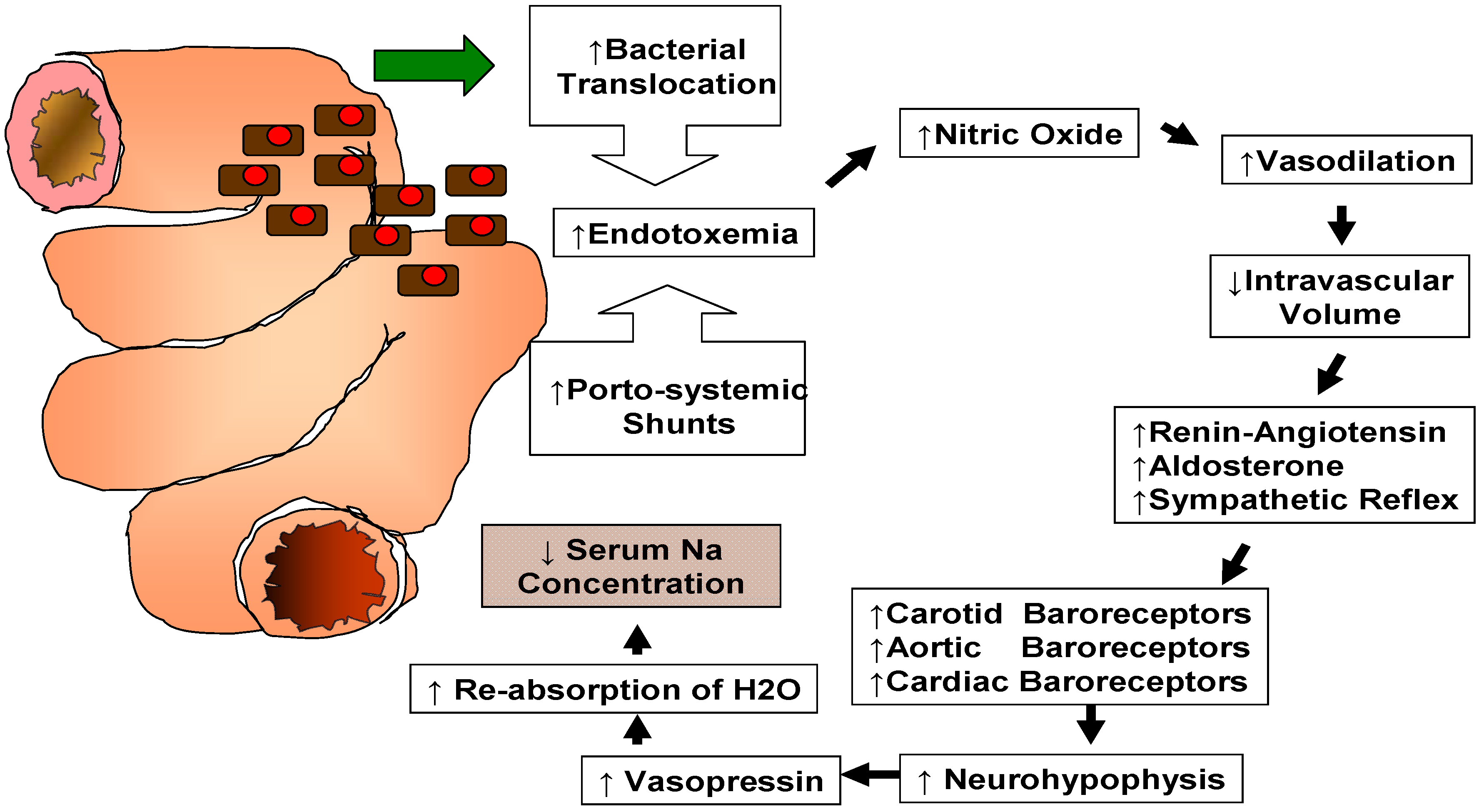 HYPONATREMIA PATHOPHYSIOLOGY EBOOK DOWNLOAD