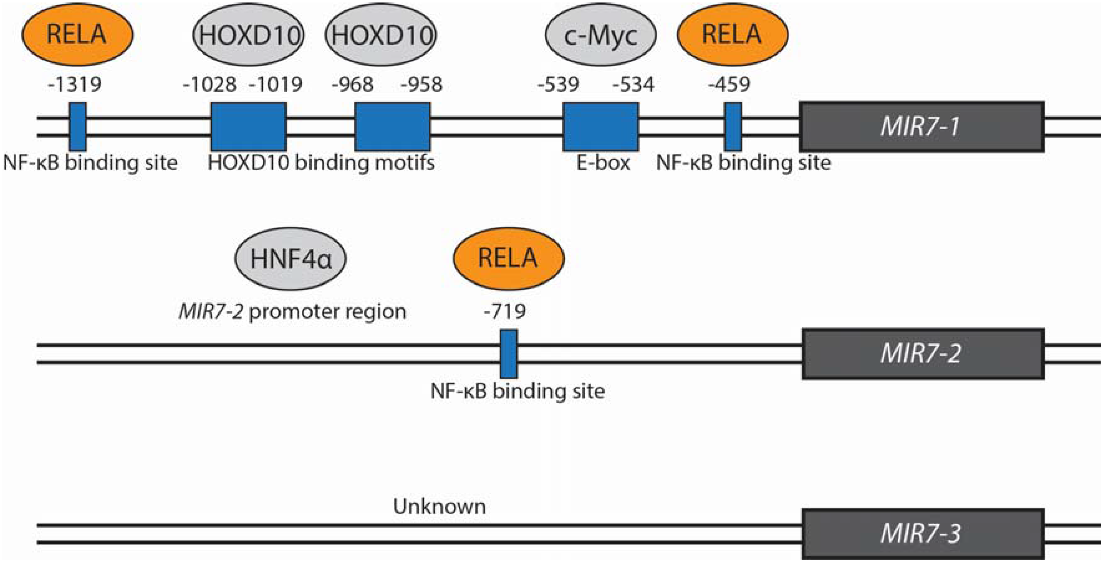 JCM | Free Full-Text | Clinical Potential of microRNA-7 in Cancer | HTML