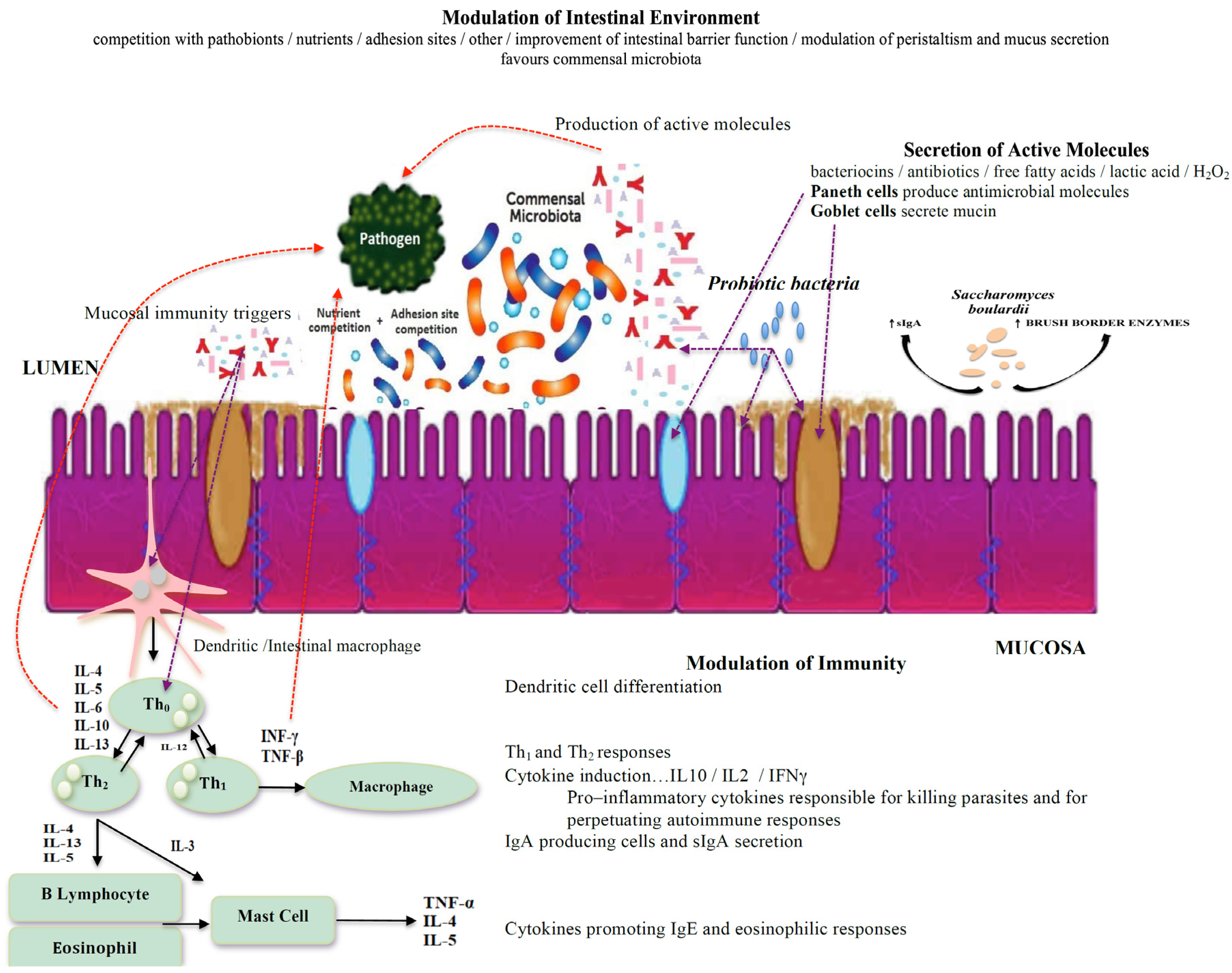 Jcm Free Full Text Modulating The Gut Micro Environment In The