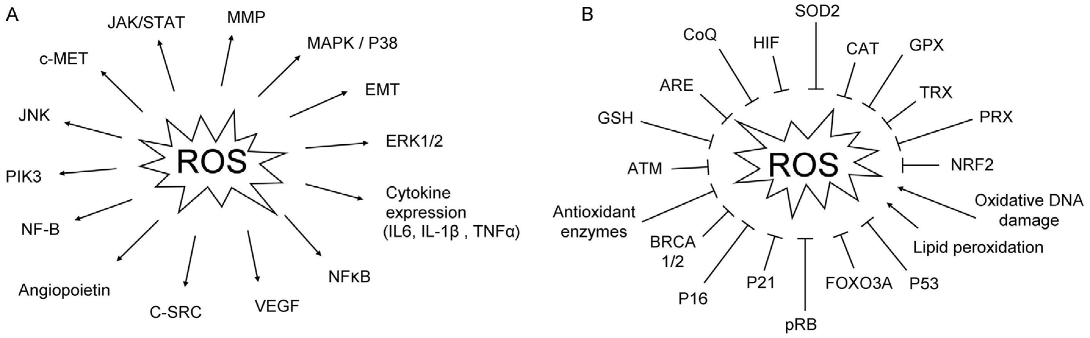 JCM   Free Full-Text   Oxidative Stress: A New Target for