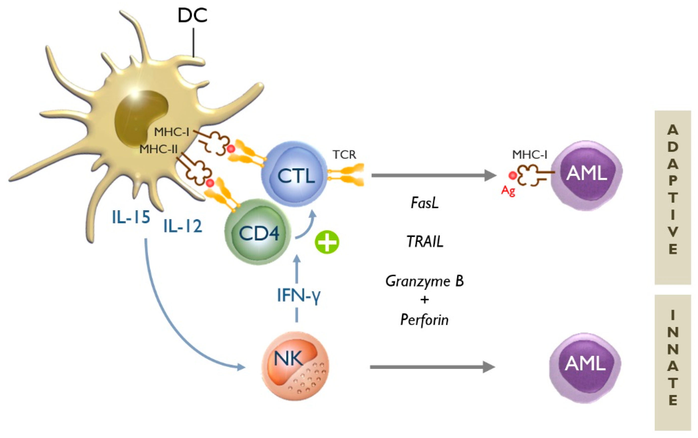 JCM | Free Full-Text | Dendritic Cell-Based Immunotherapy of