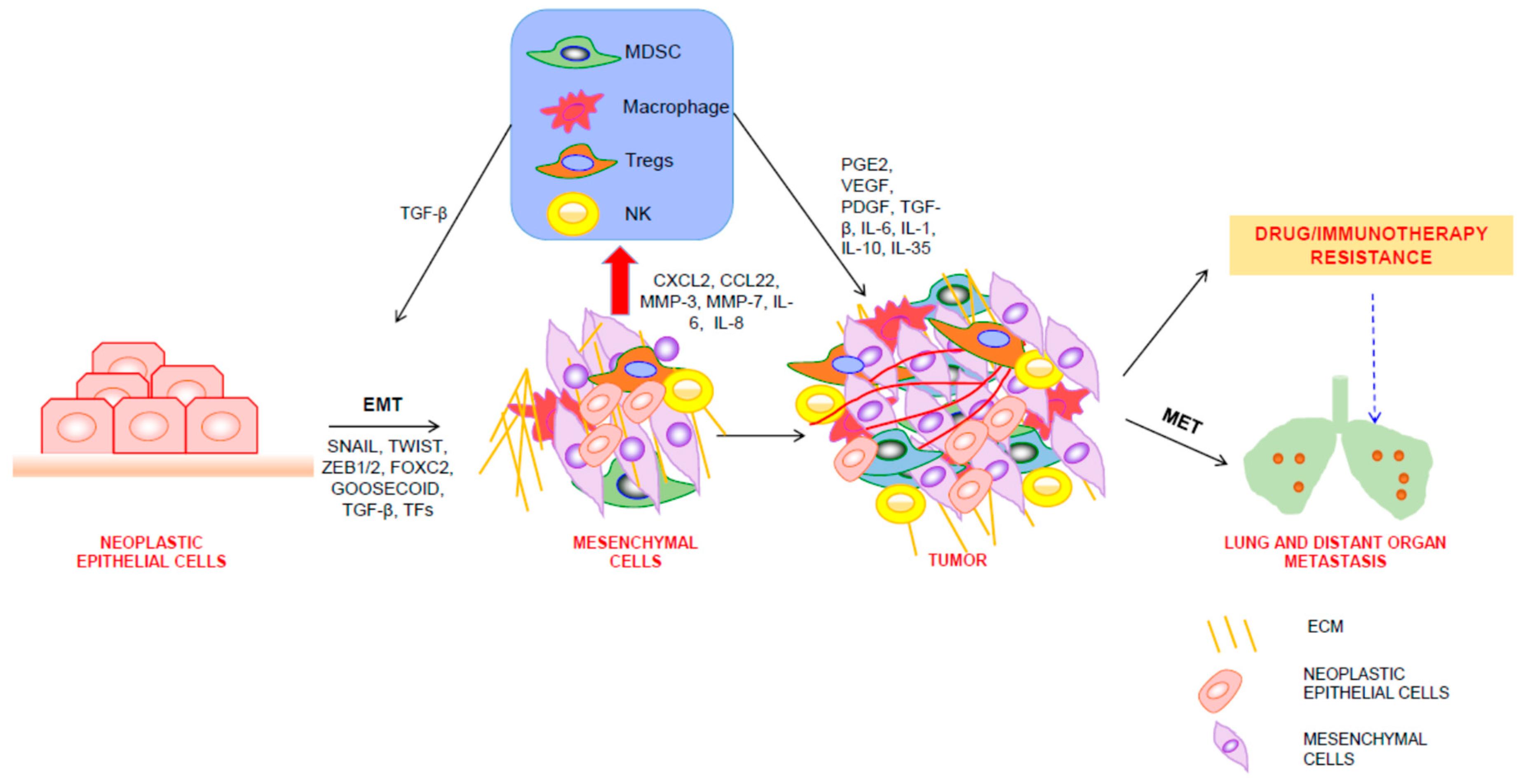 gene involved in breast cancer