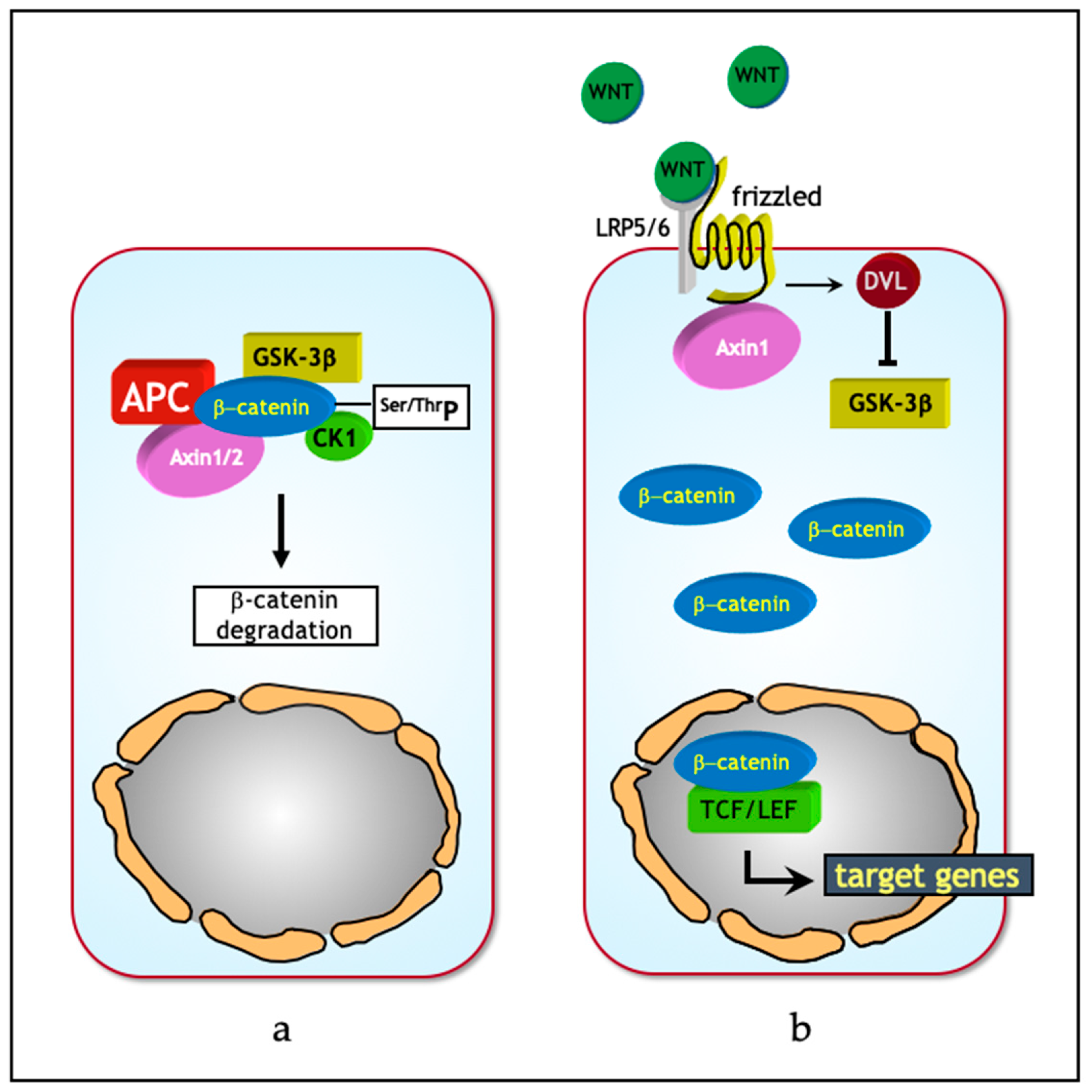 Jcm Free Full Text Wnt Signaling In Ovarian Cancer Stemness Emt And Therapy Resistance Html