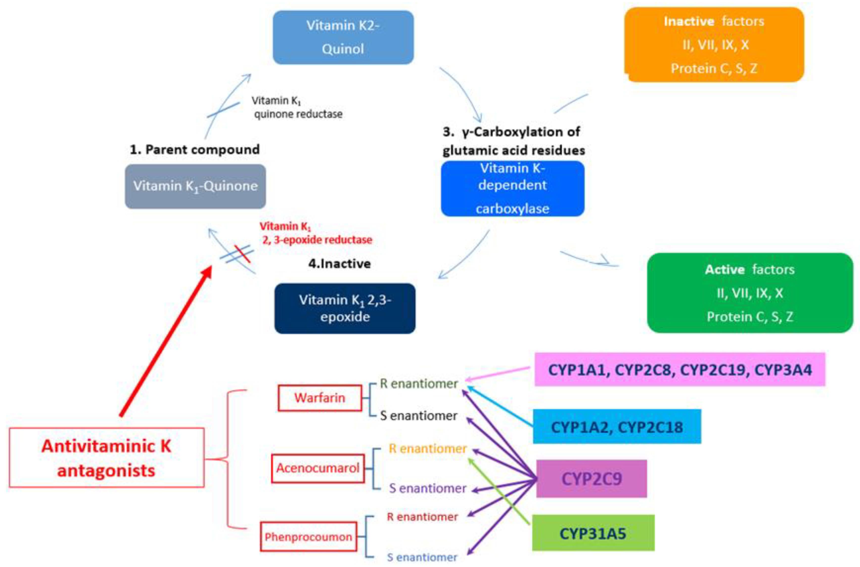 modafinil mechanism of action medscape