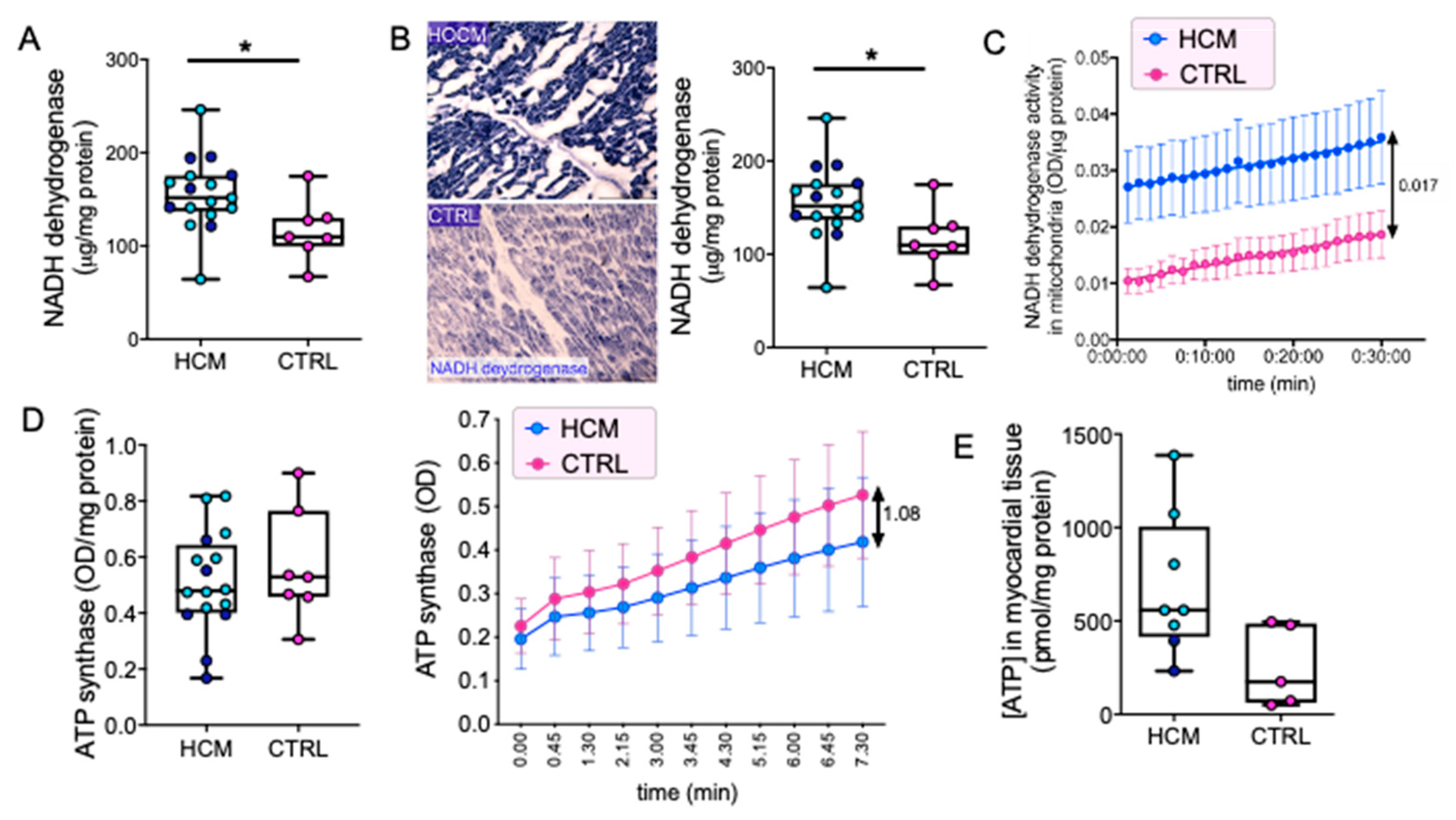 Jcm Free Full Text Mitochondrial Energetics And Ca2 Activated Atpase In Obstructive Hypertrophic Cardiomyopathy Html