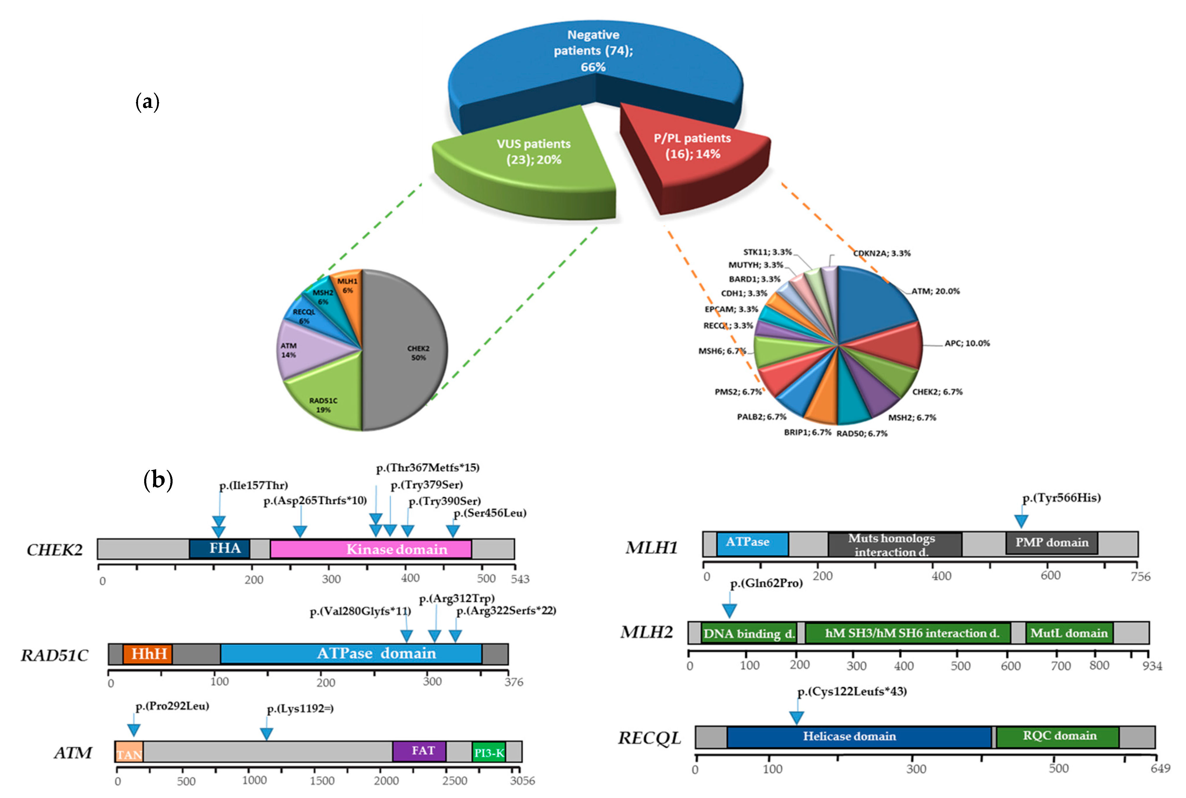 Jcm Free Full Text Beyond Brca1 And Brca2 Deleterious Variants In Dna Repair Pathway Genes In Italian Families With Breast Ovarian And Pancreatic Cancers Html