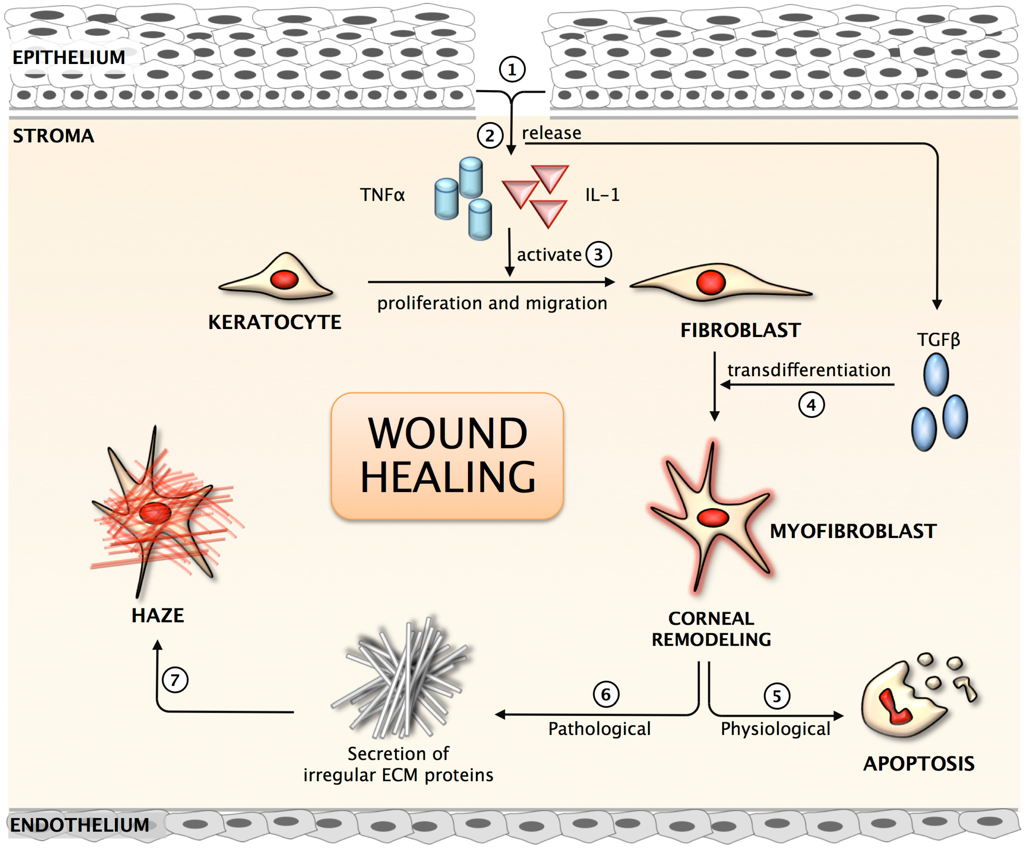 Jfb Free Full Text Nanomedicine Approaches For Corneal
