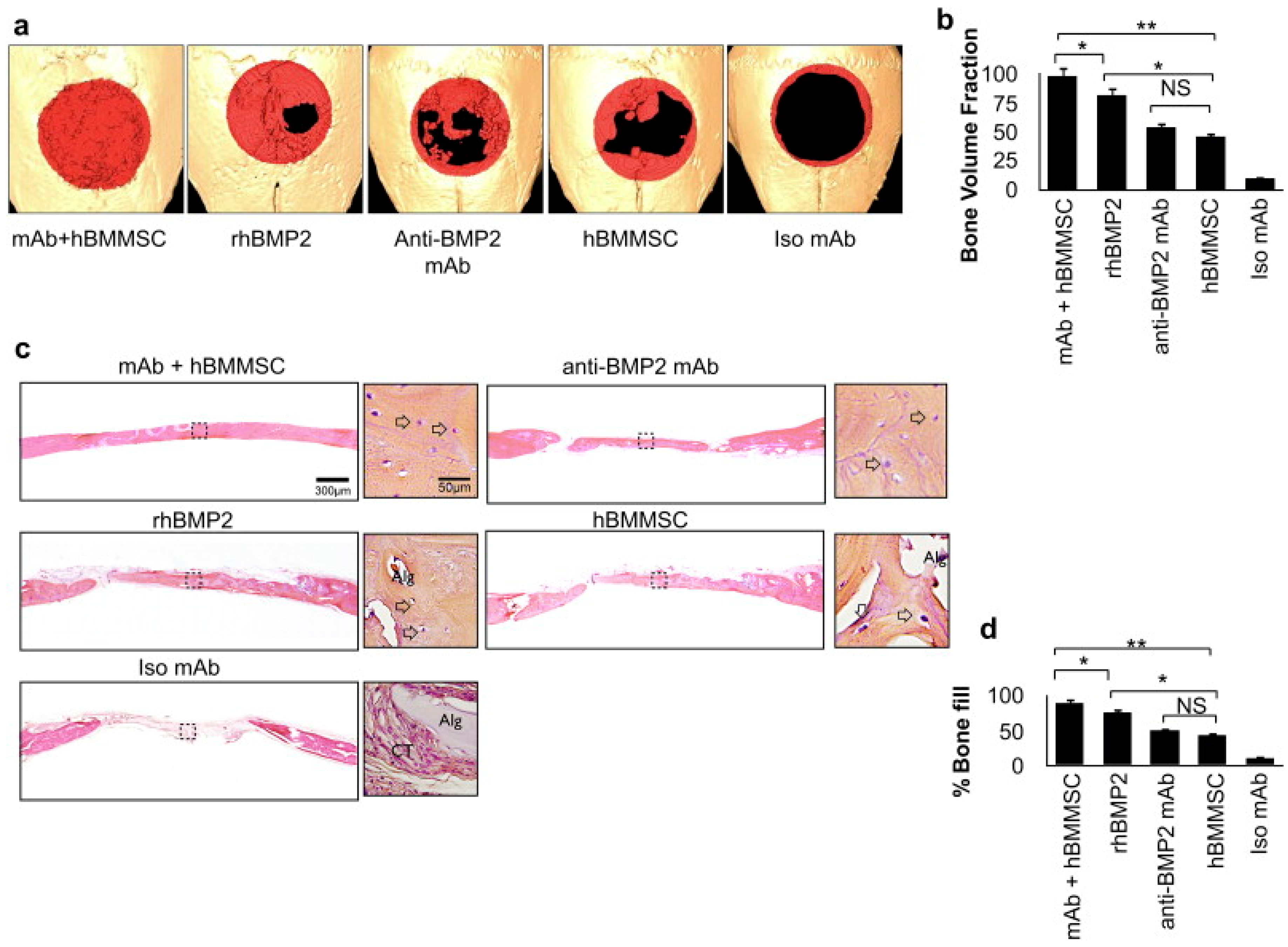 history of injectable tissue engineering With a gelling agent commonly used in preparing pastries, researchers from the inspired nanomaterials and tissue engineering laboratory have successfully fabricated an injectable bandage to stop bleeding and promote wound healing.