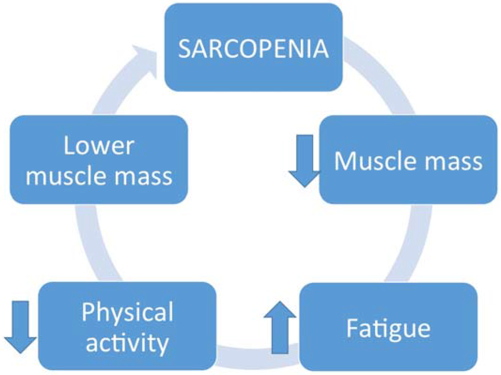 Muscle increase or decrease