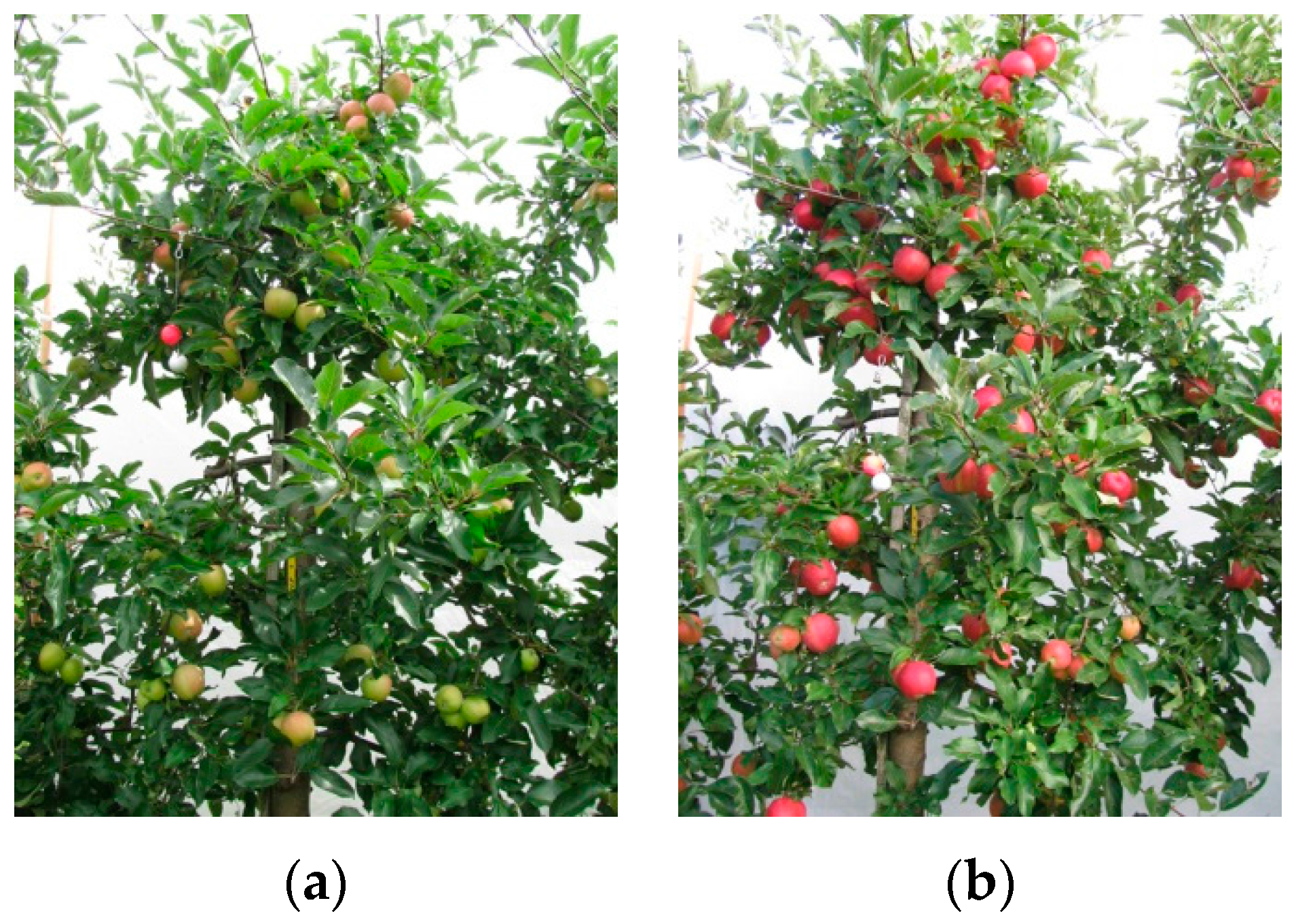 J Imaging Free Full Text Early Yield Prediction Using Image Analysis Of Apple Fruit And Tree Canopy Features With Neural Networks Html
