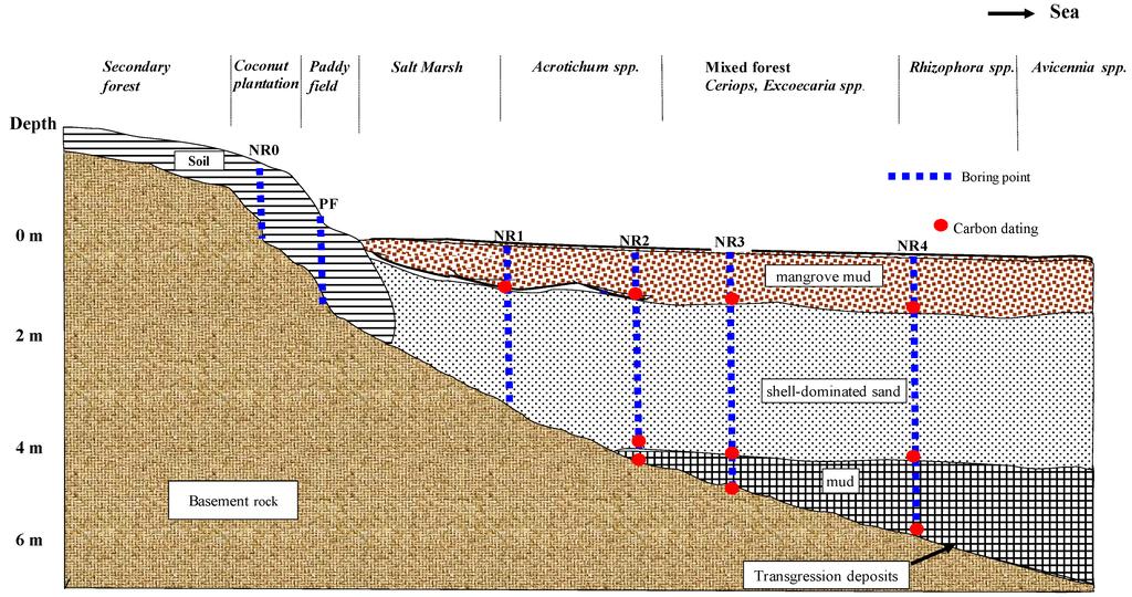Jmse free full text soil organic carbon in mangrove for 0 4 soil carbon