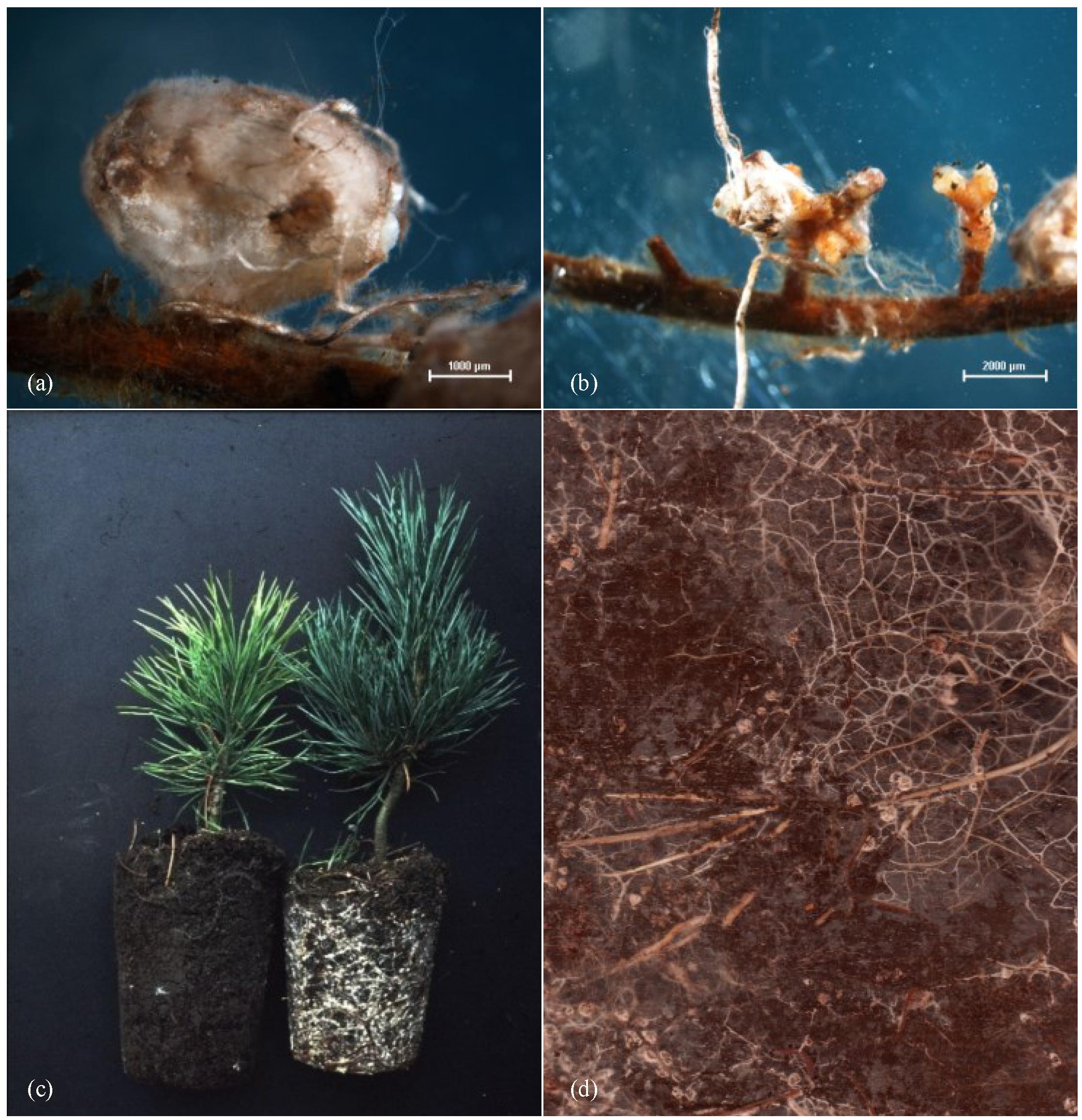 JoF | Free Full-Text | Host-Specialist Dominated Ectomycorrhizal ...
