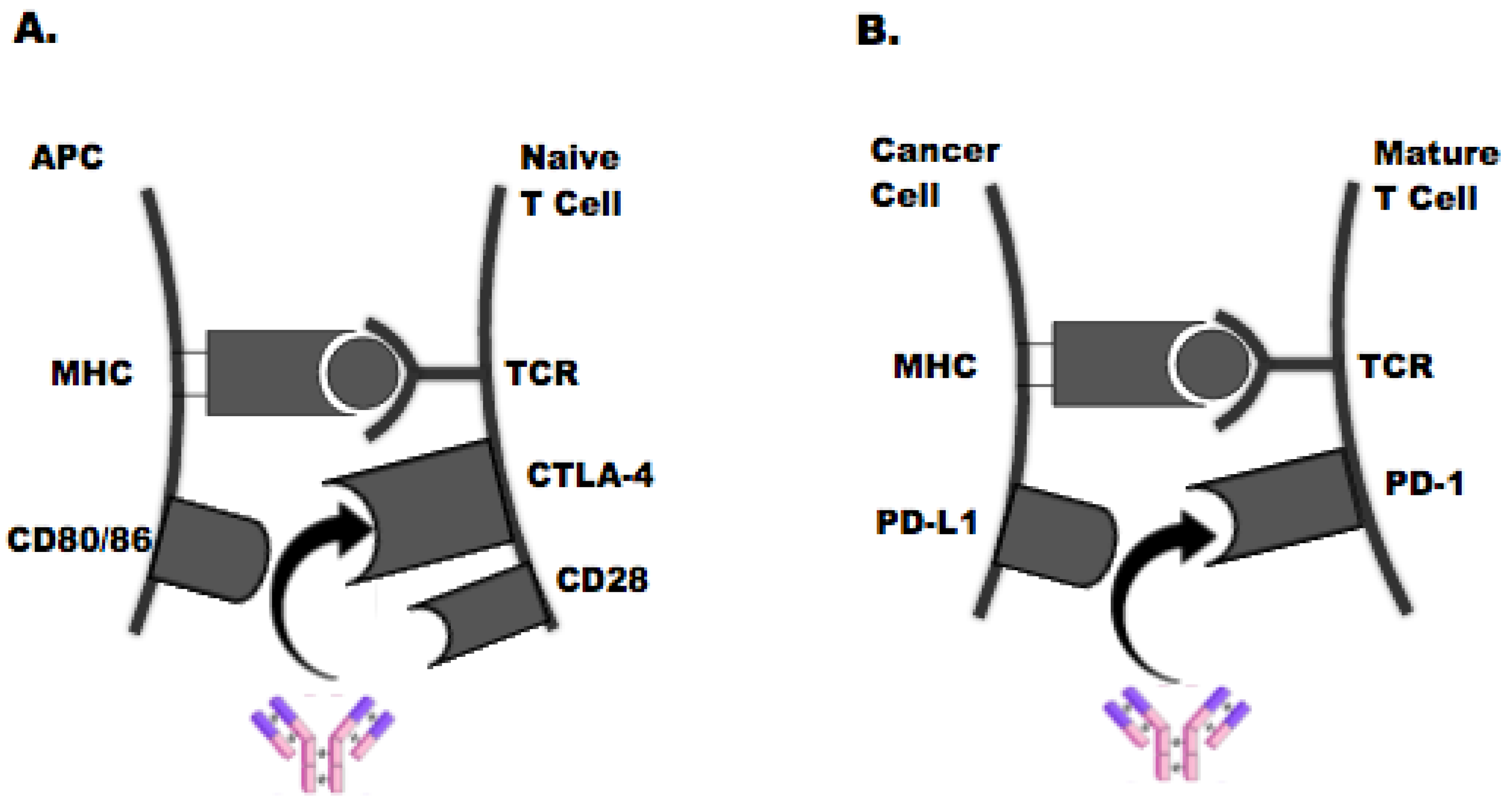 JPM   Free Full-Text   The Emerging Role of Checkpoint Inhibition in