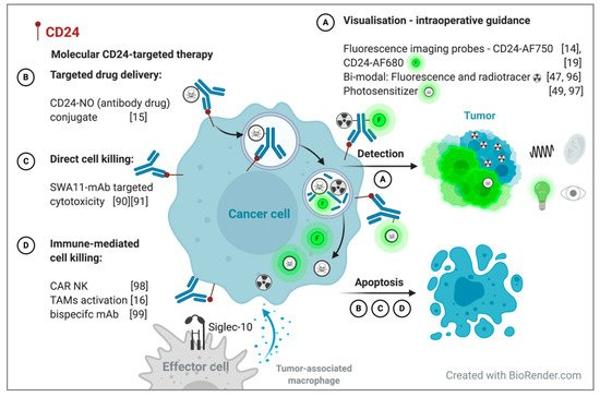 JPM | Special Issue : CD24 - a Novel Target for Cancer Therapy and a  Biomarker for Cancer Prediction