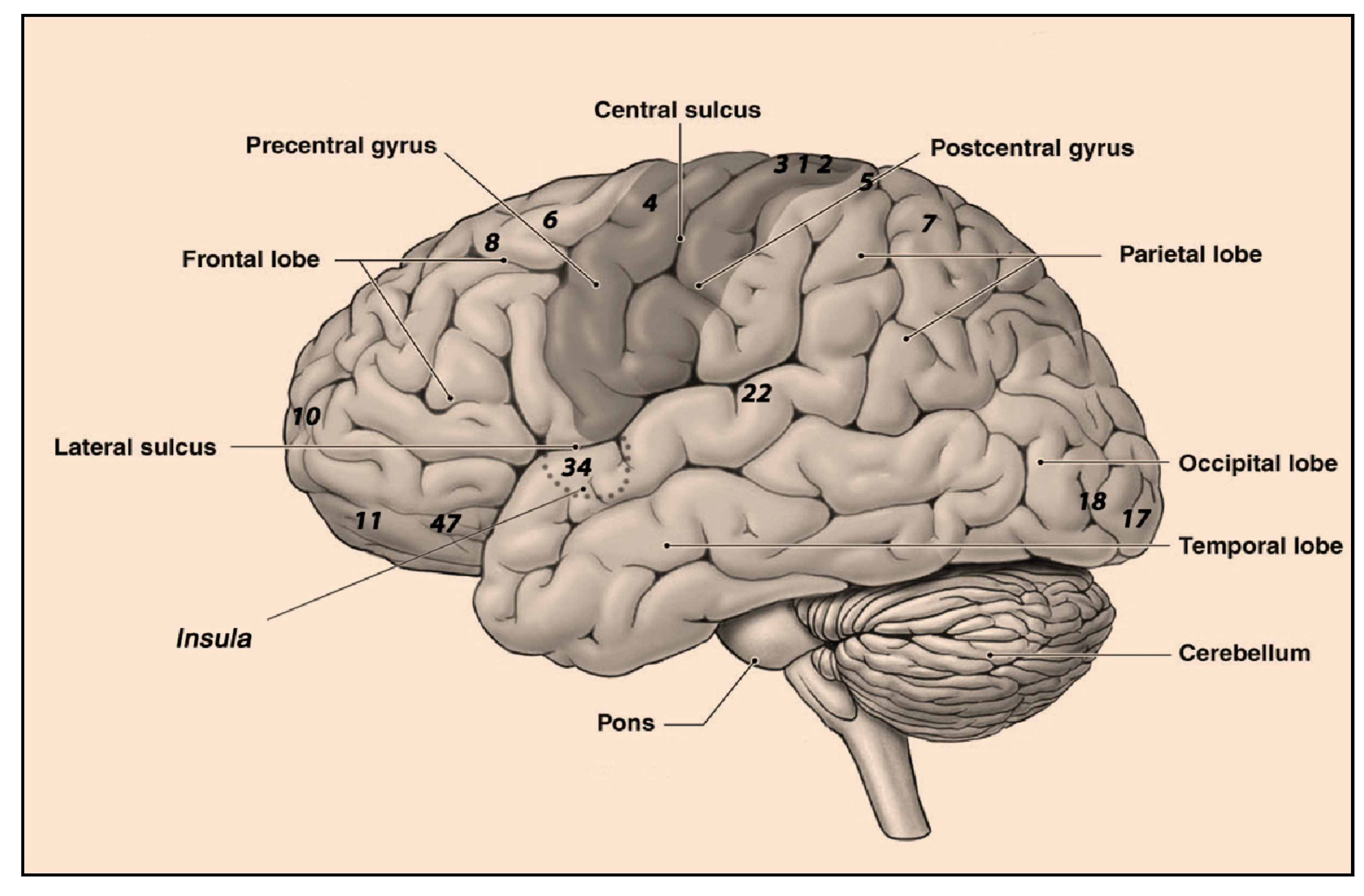 Life | Free Full-Text | Cognitive Neuroscience in Space