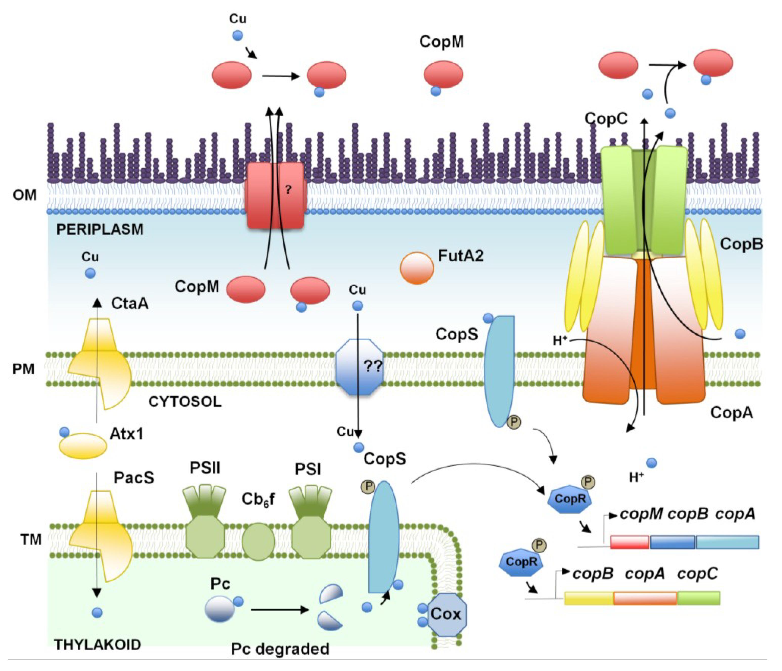 Design Of Biotransformation Process Pdf
