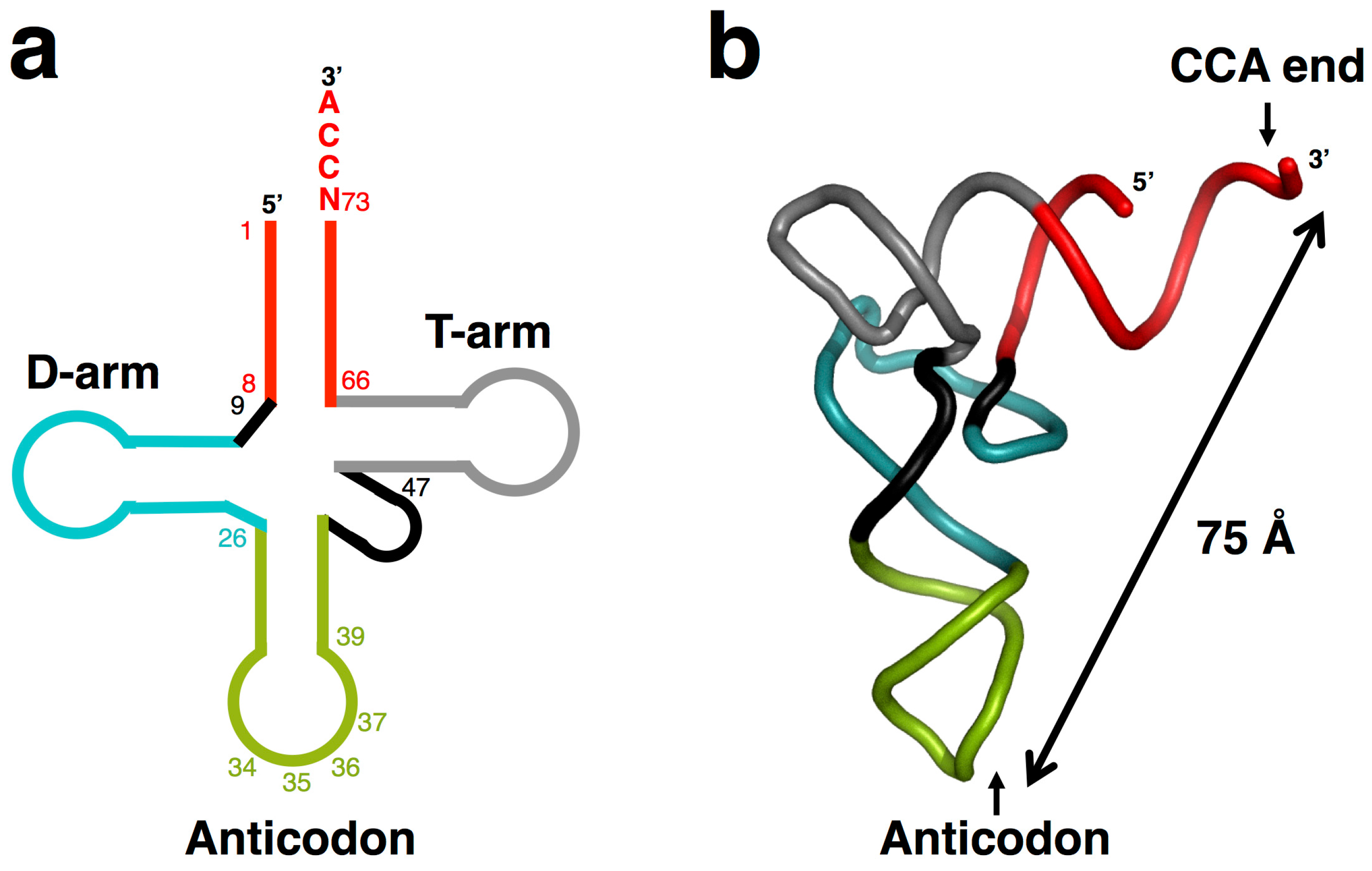 Origins and Early Evolution of the tRNA MoleculeAbstract Share & Cite This ArticleRelated ArticlesArticle MetricsArticle Access StatisticsCommentsCitations