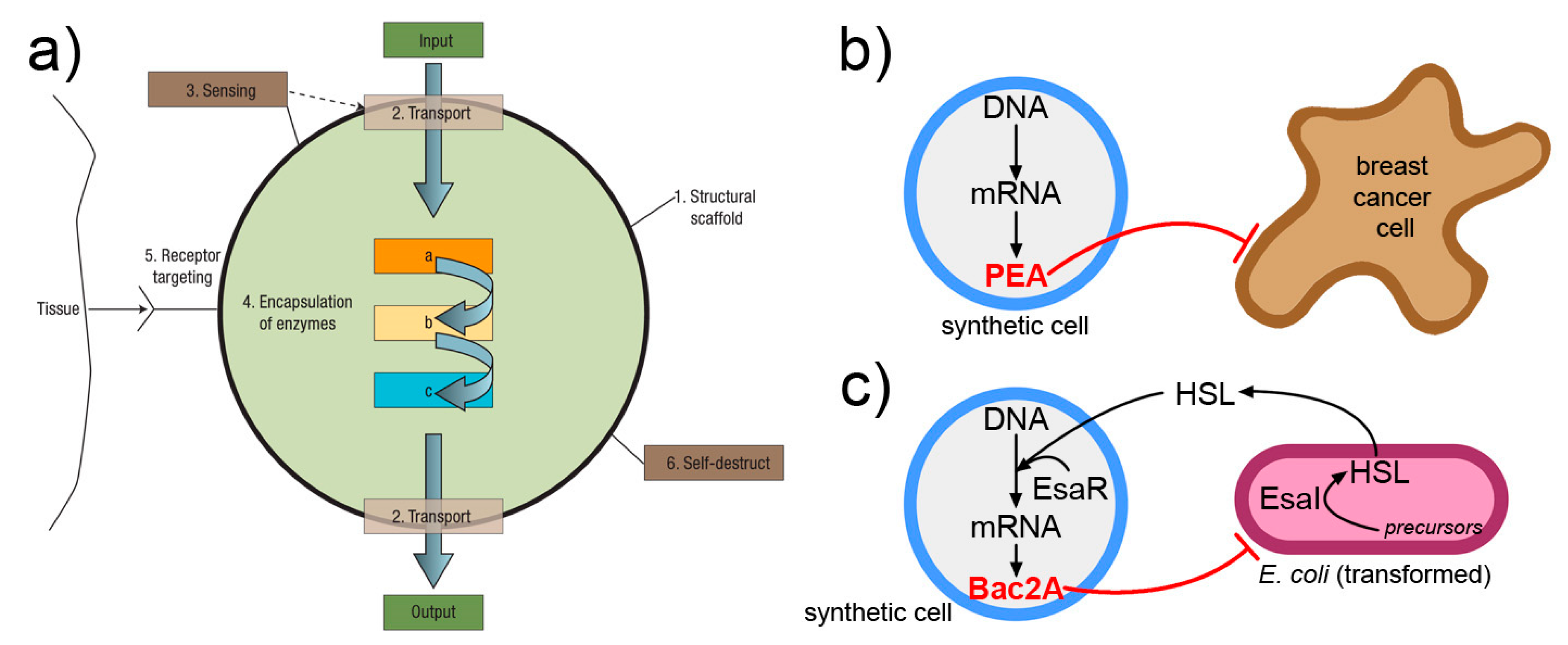 """Life   Free Full-Text   Is Research on """"Synthetic Cells"""