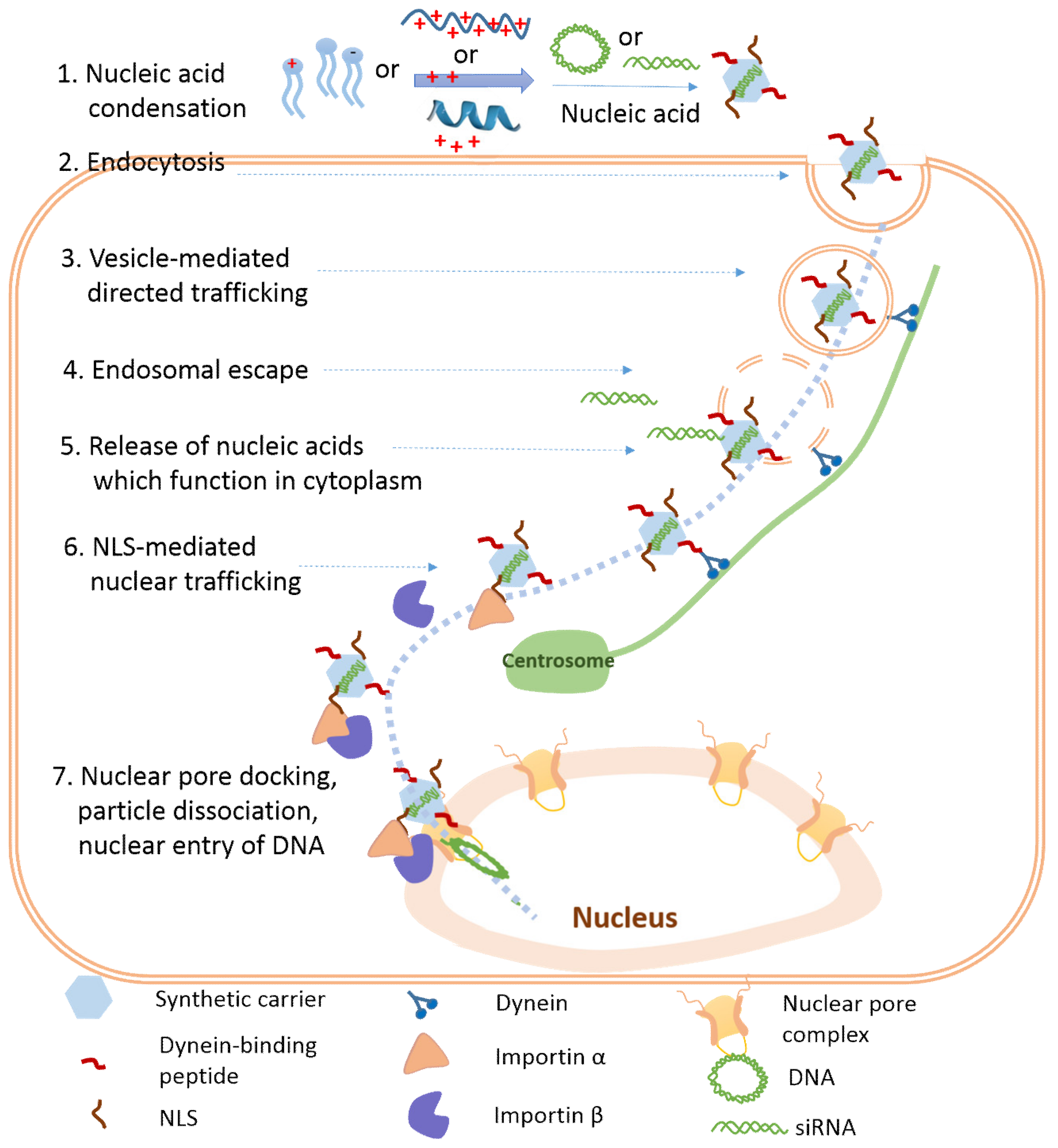 Synthetic Approaches For Nucleic